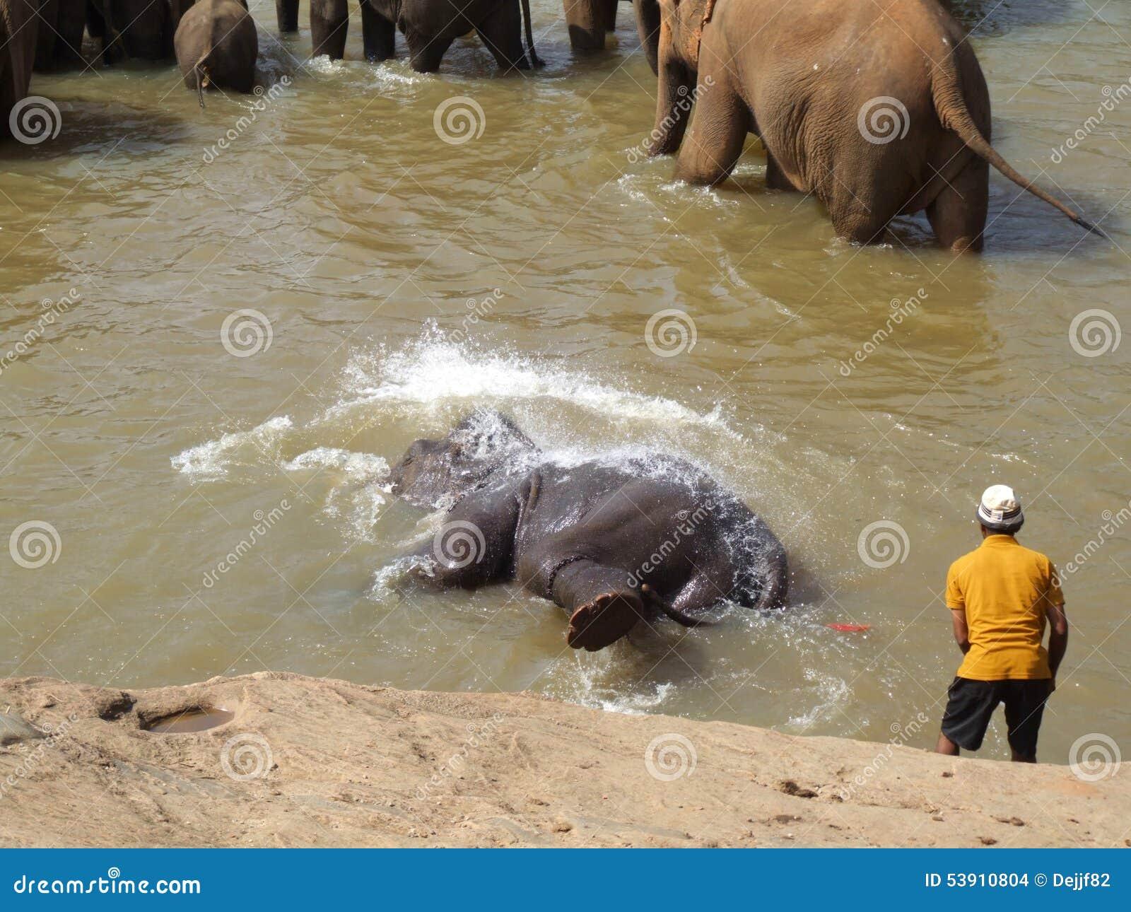 O elefante está tendo o divertimento