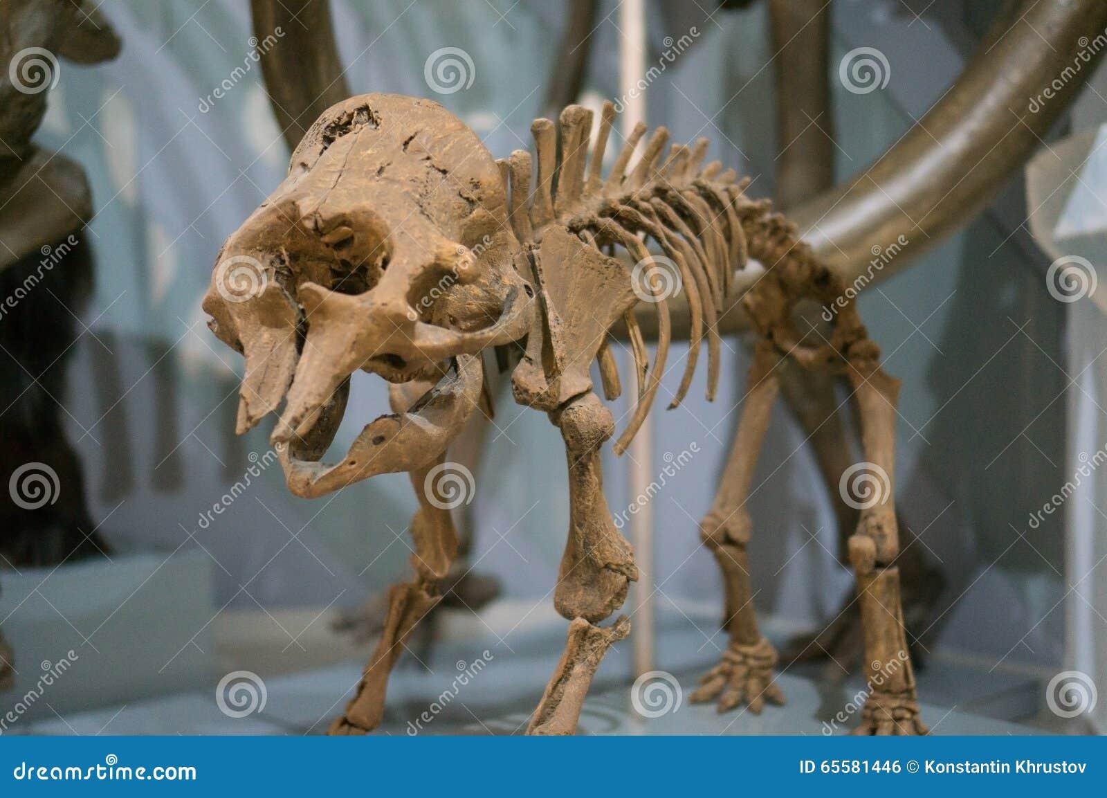 O esqueleto de um mammoth