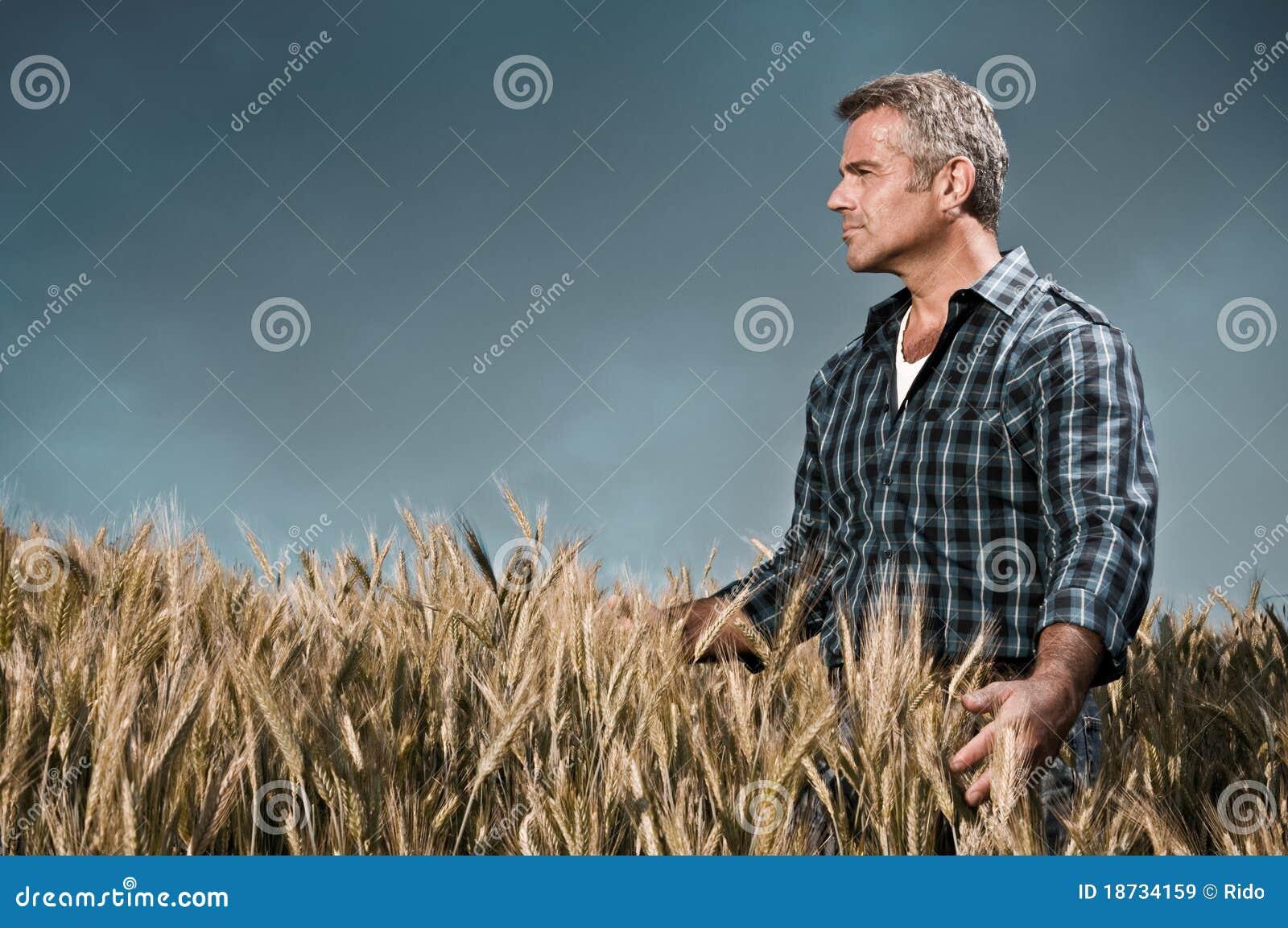 O fazendeiro tem o cuidado de seu campo de trigo