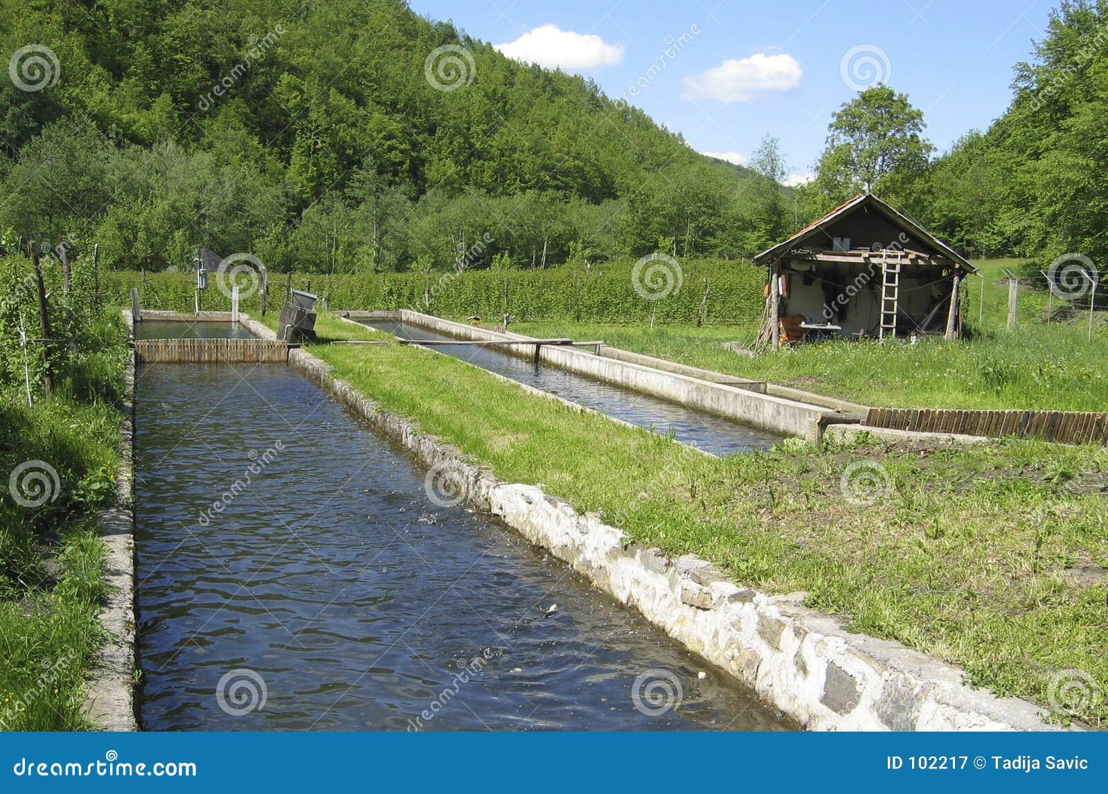O fish-pond