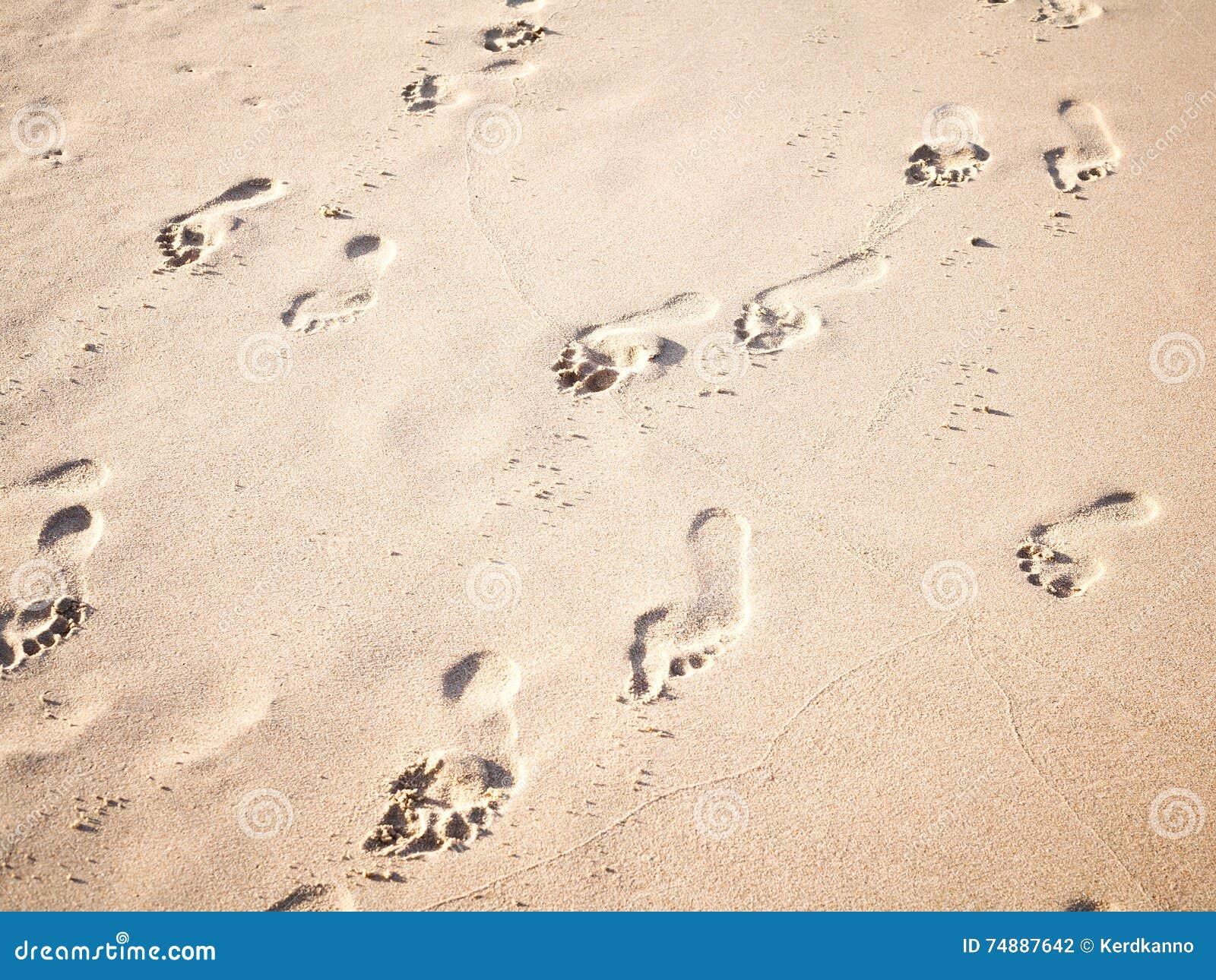 O foco e o tom macios das pegadas na praia tropical lixam a sagacidade