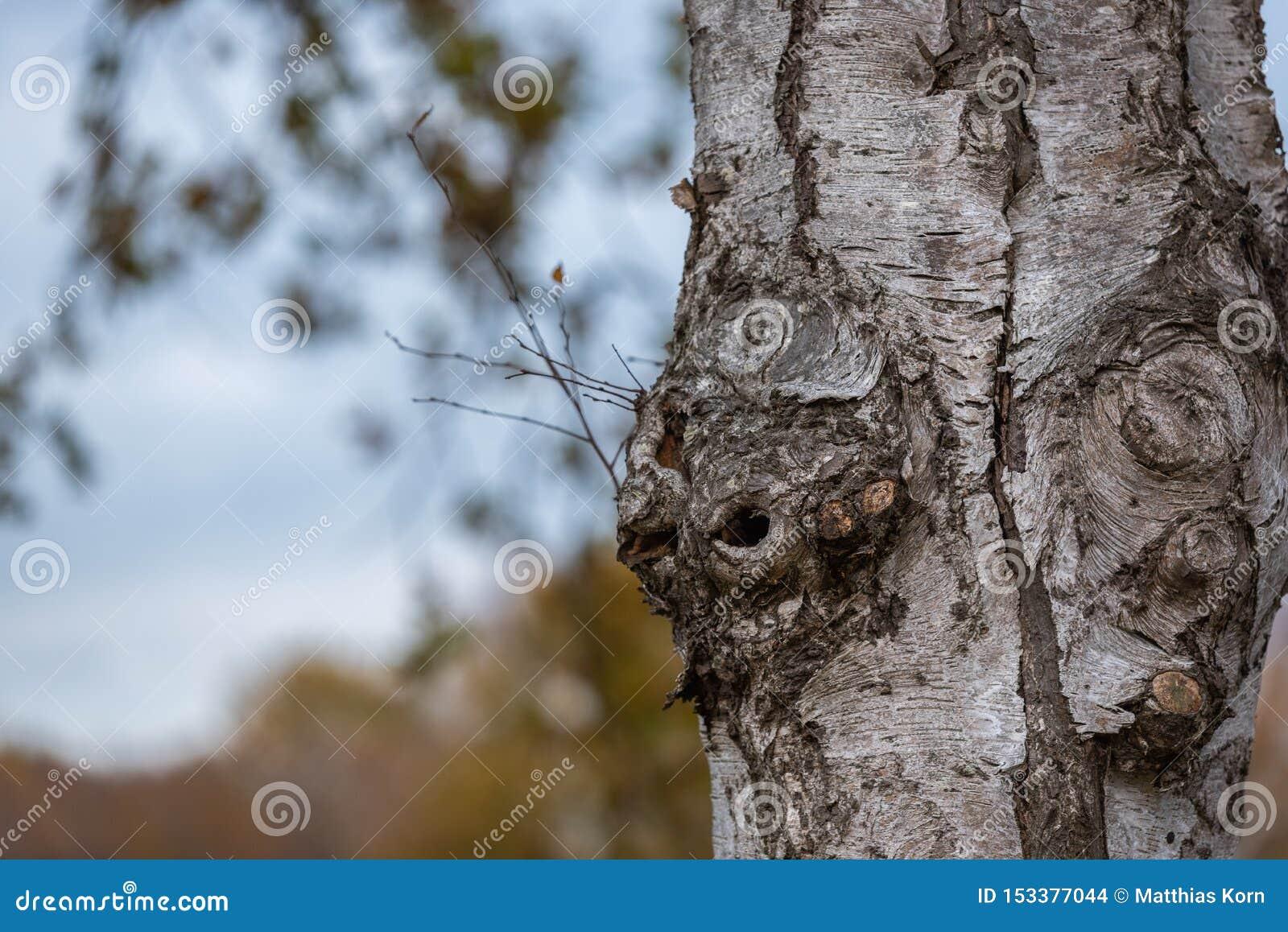 O foco principal está em árvores em situações diferentes