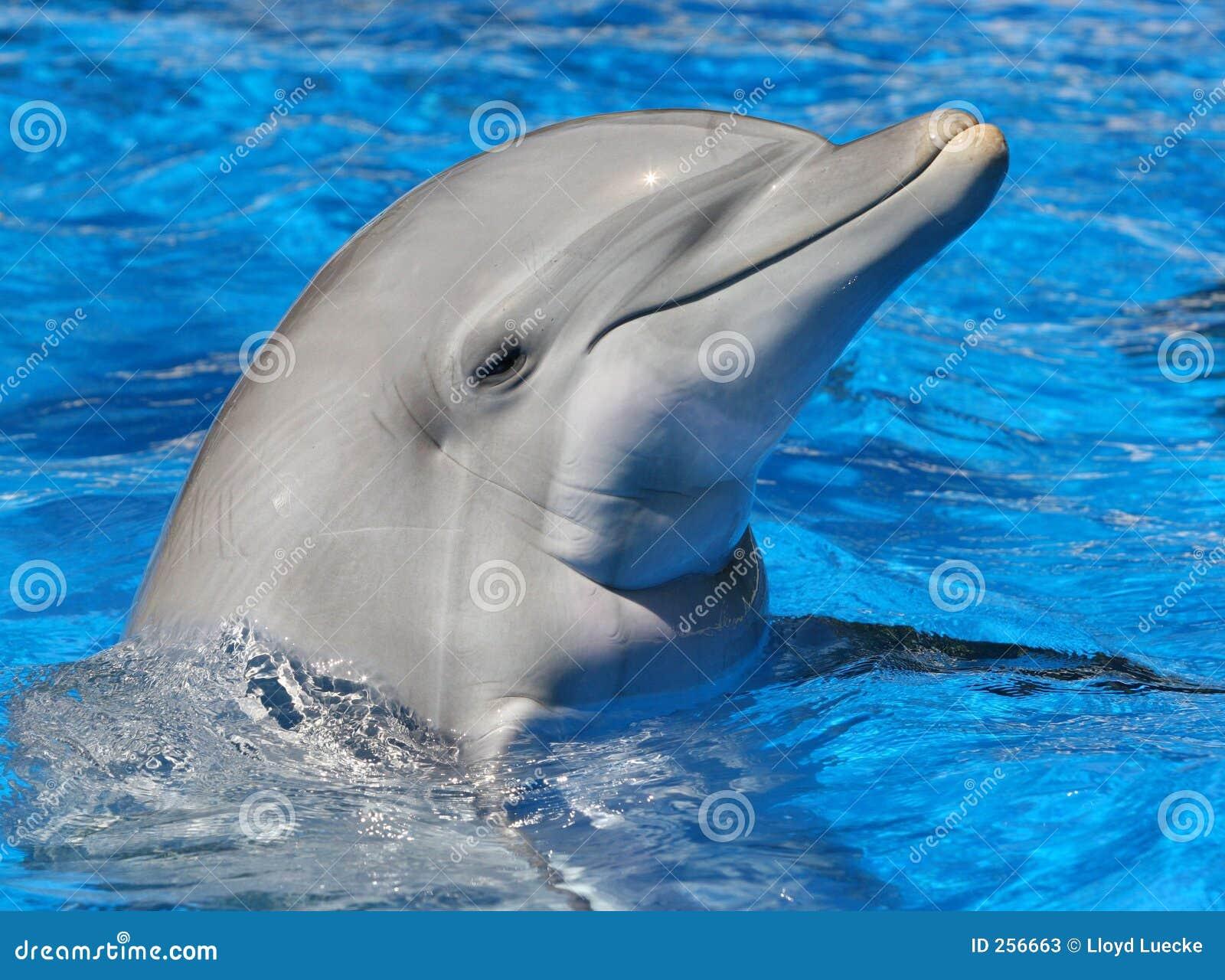O frasco cheirou o golfinho
