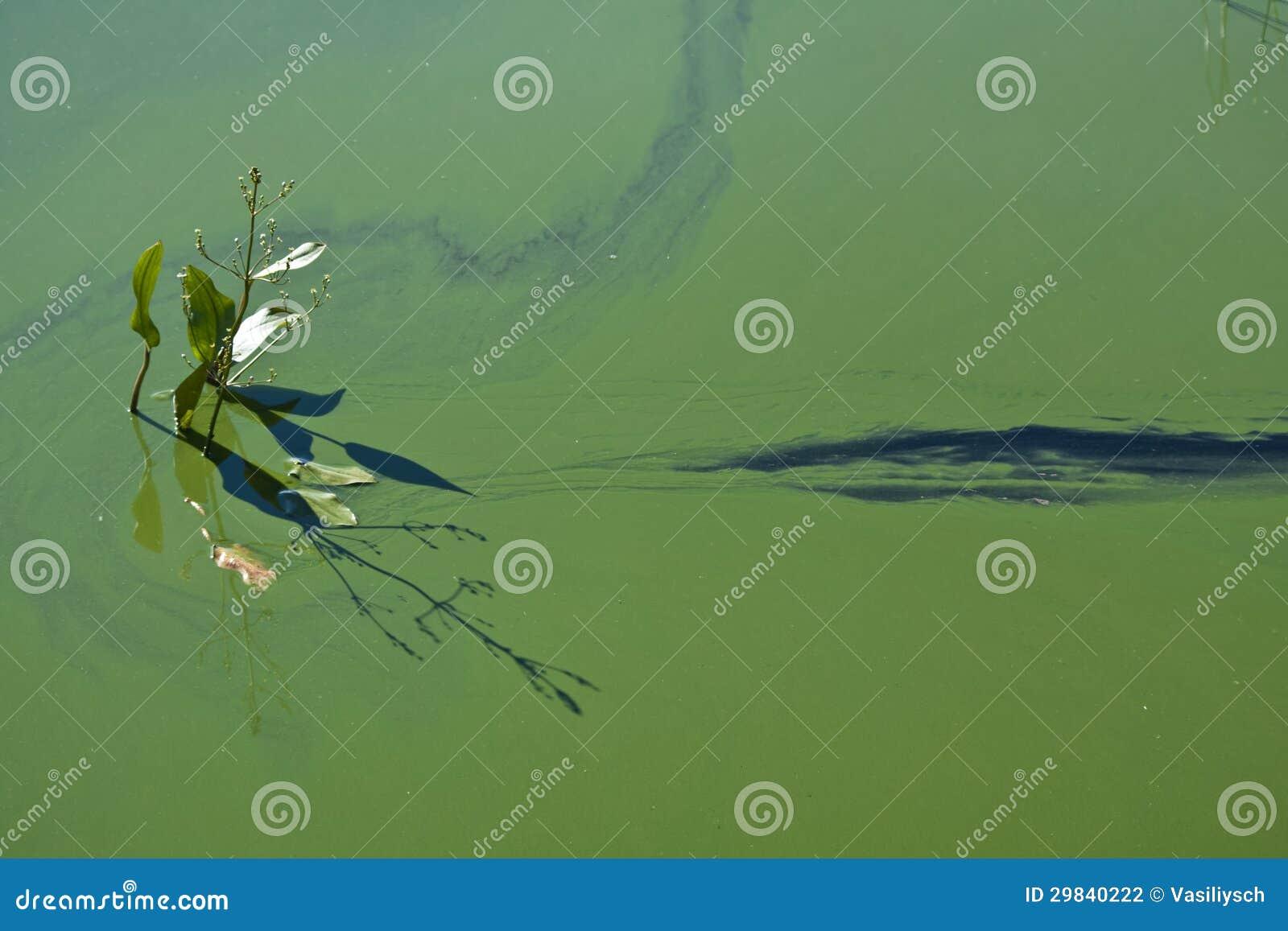 O fulgor da água de florescência