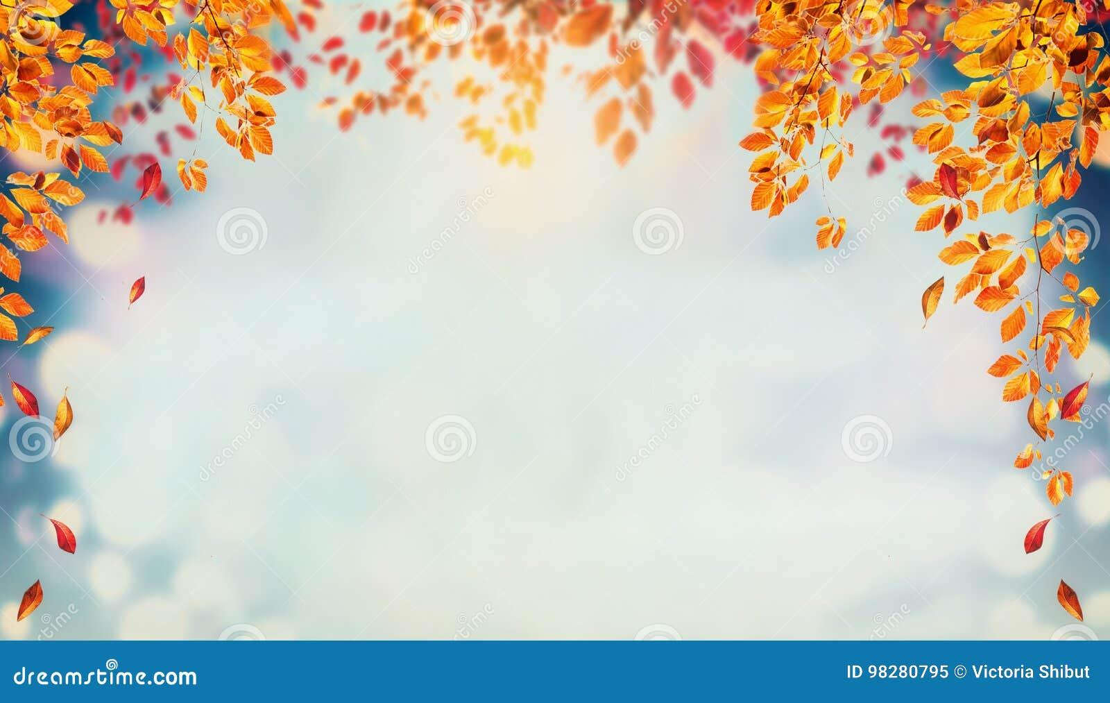 O fundo bonito da folha do outono com refeições matinais e a árvore de queda sae no céu