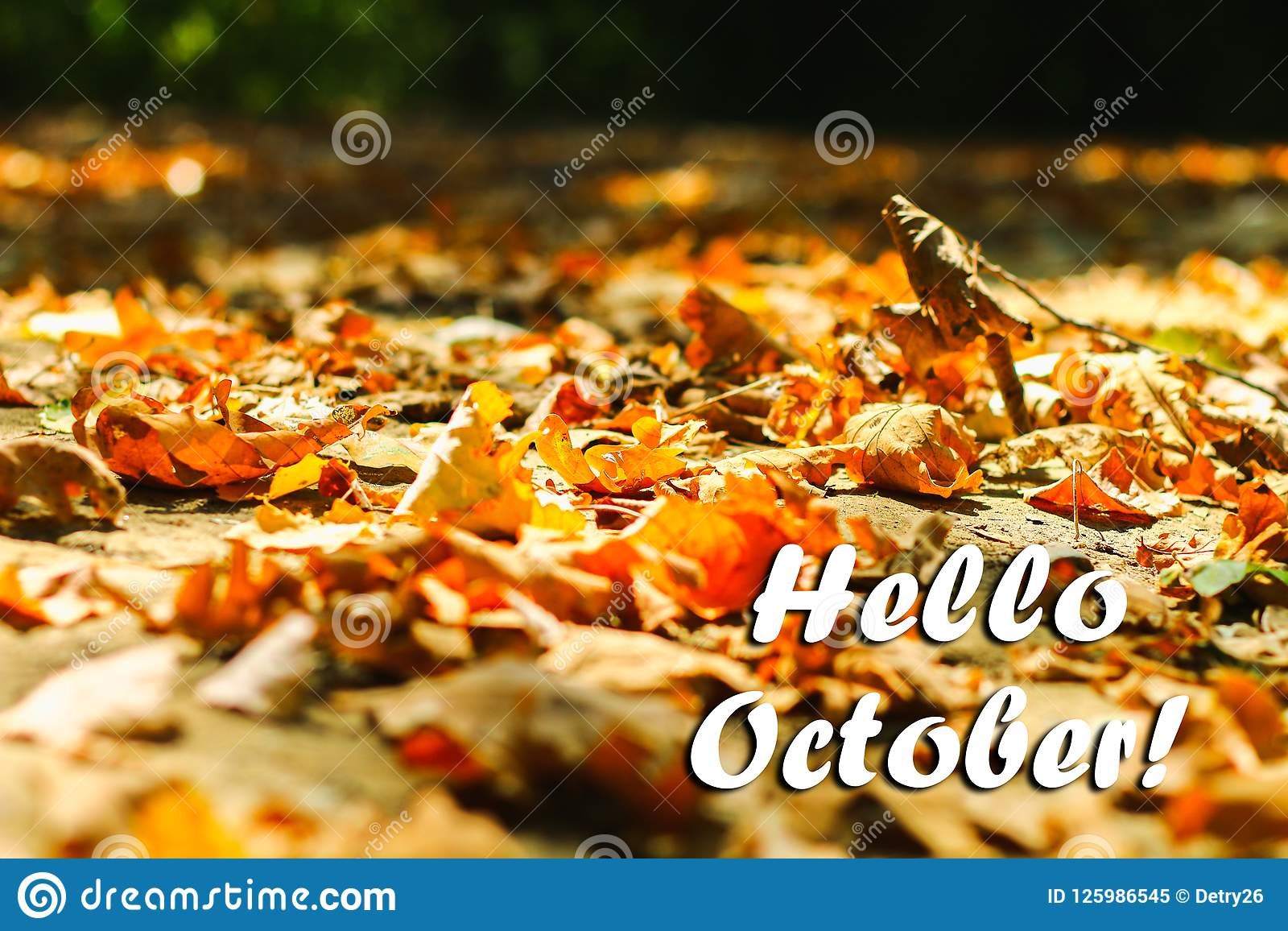 O fundo das folhas de outono das folhas de outono em um parque na terra, amarelo, verde sae no parque do outono olá! outubro
