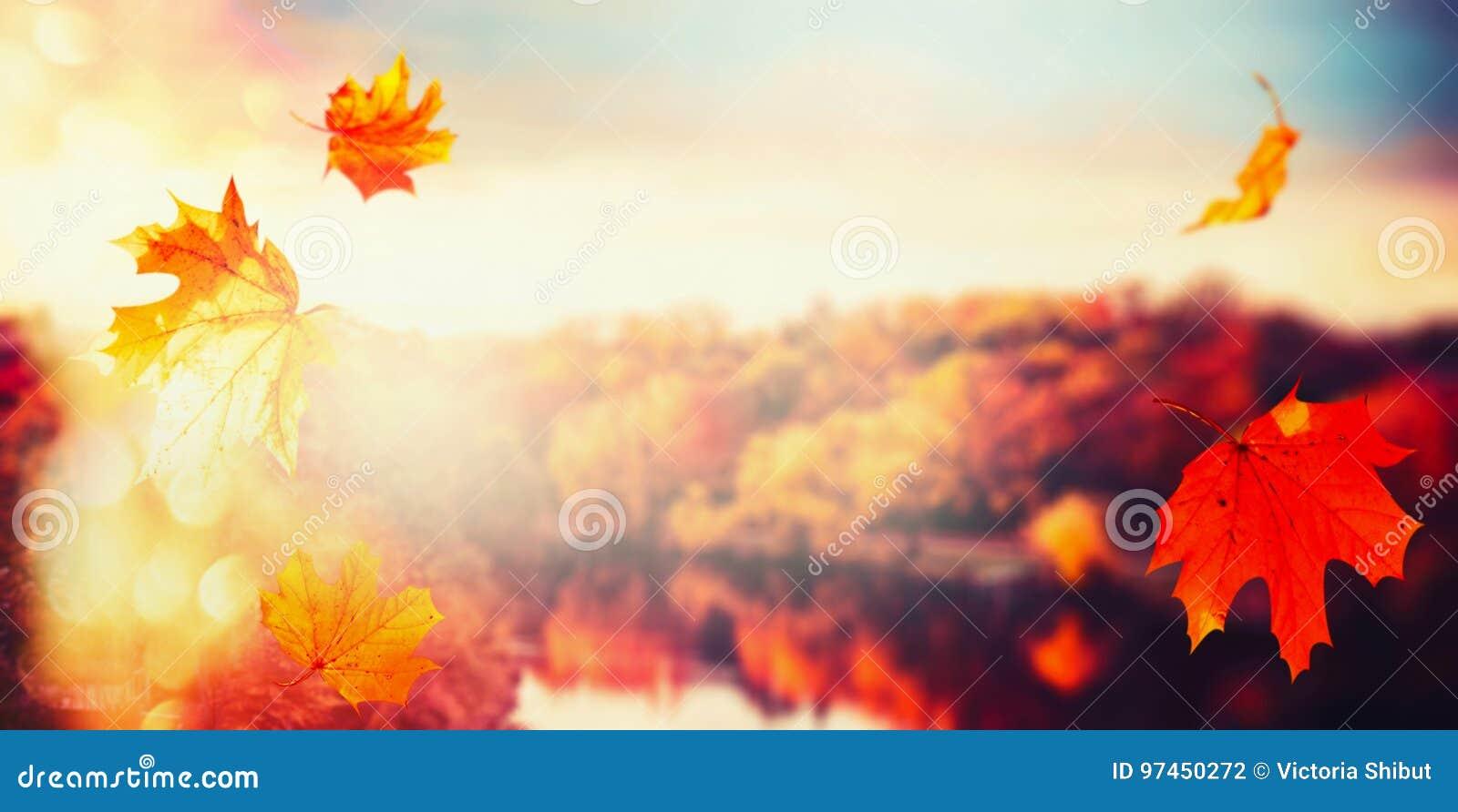 O fundo do outono com queda sae na paisagem do parque da cidade com as árvores coloridas na luz do por do sol com o bokeh