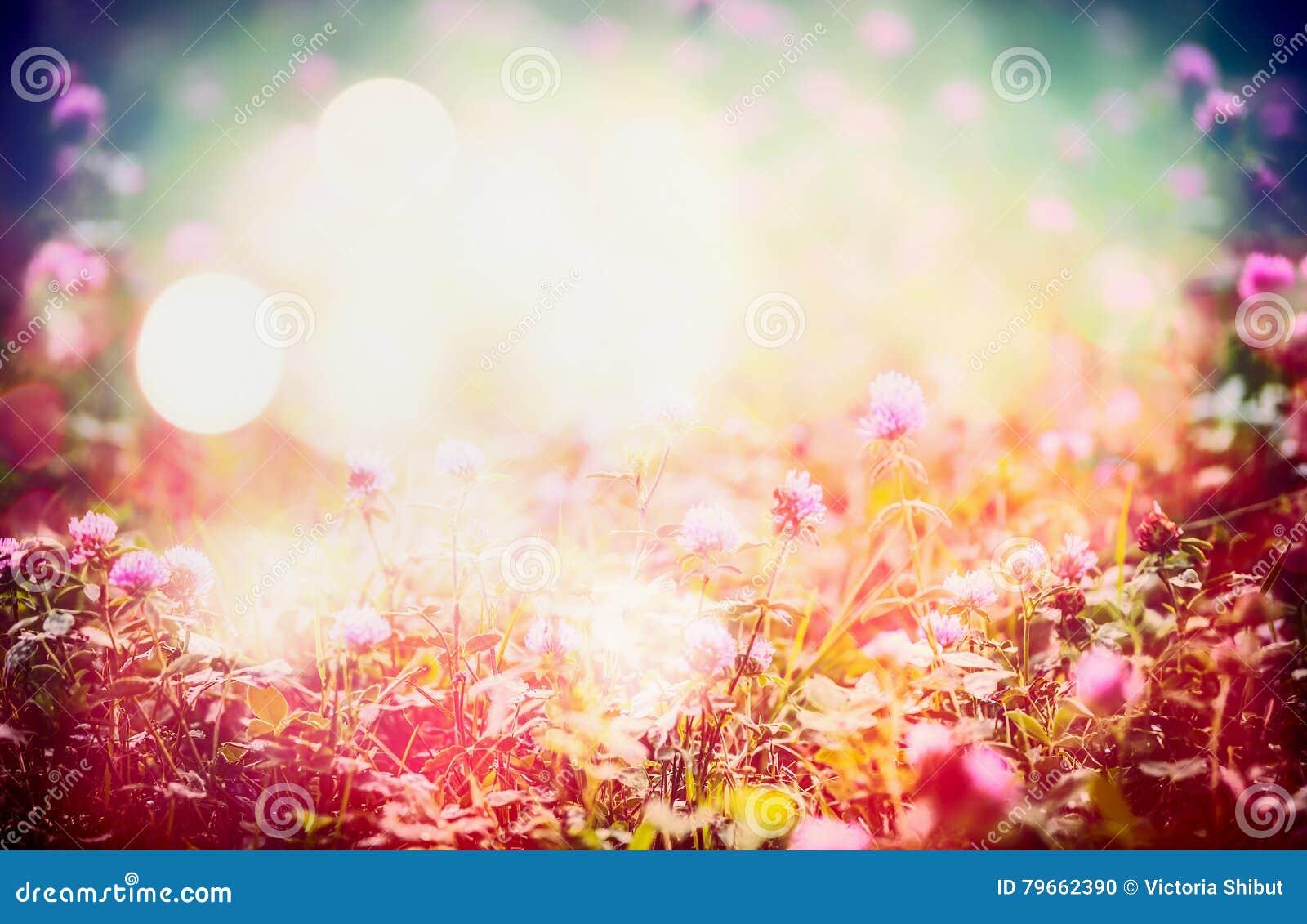 O fundo floral bonito da natureza com as flores selvagens no prado e o bokeh iluminam-se