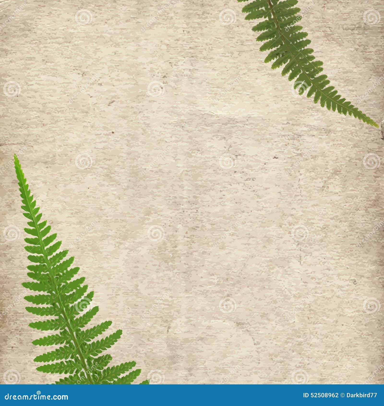 O fundo velho da textura do papel do vintage com a samambaia seca verde sae