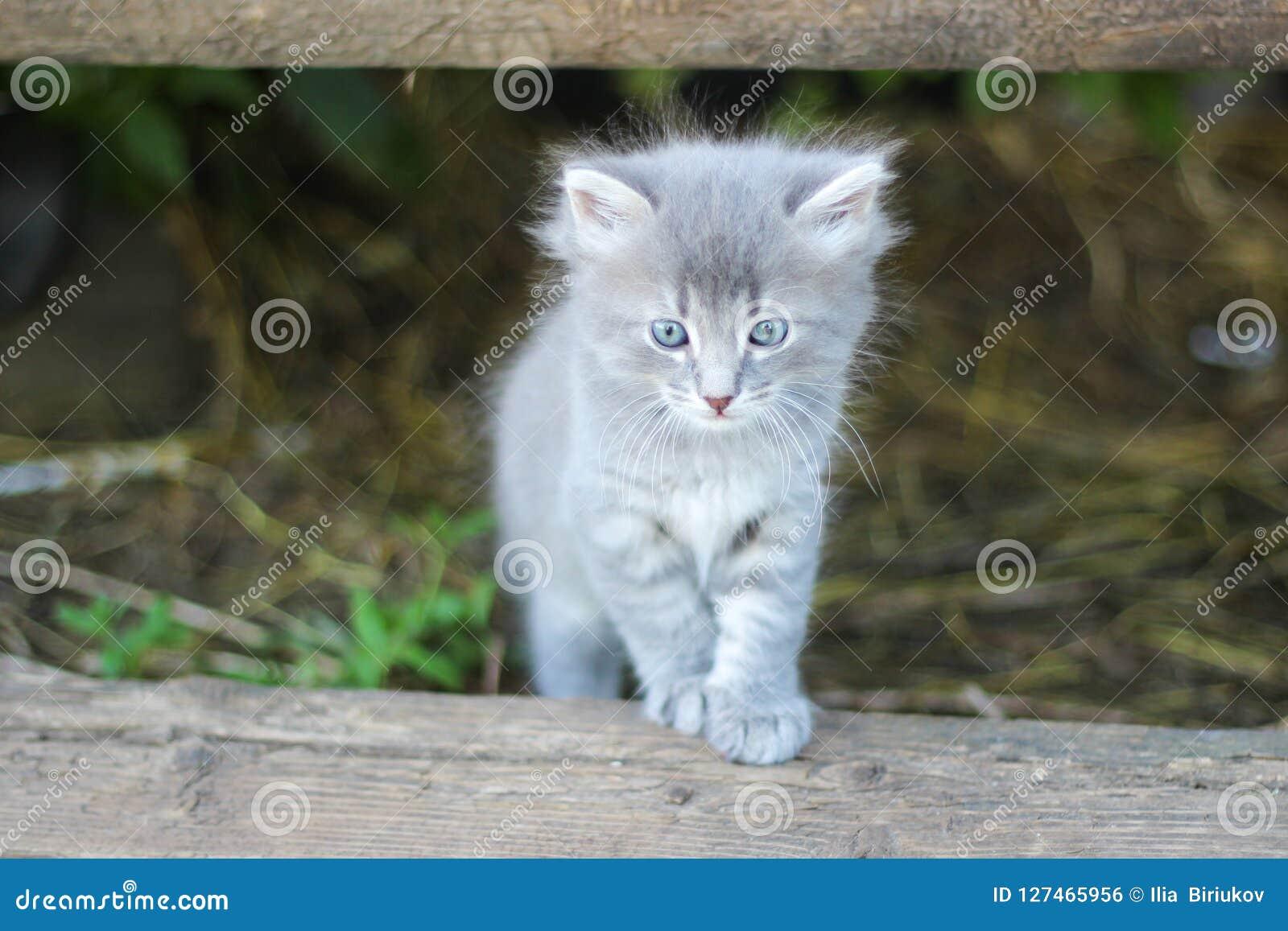 O gatinho cinzento listrado amedrontado agradável esconde sob o patamar