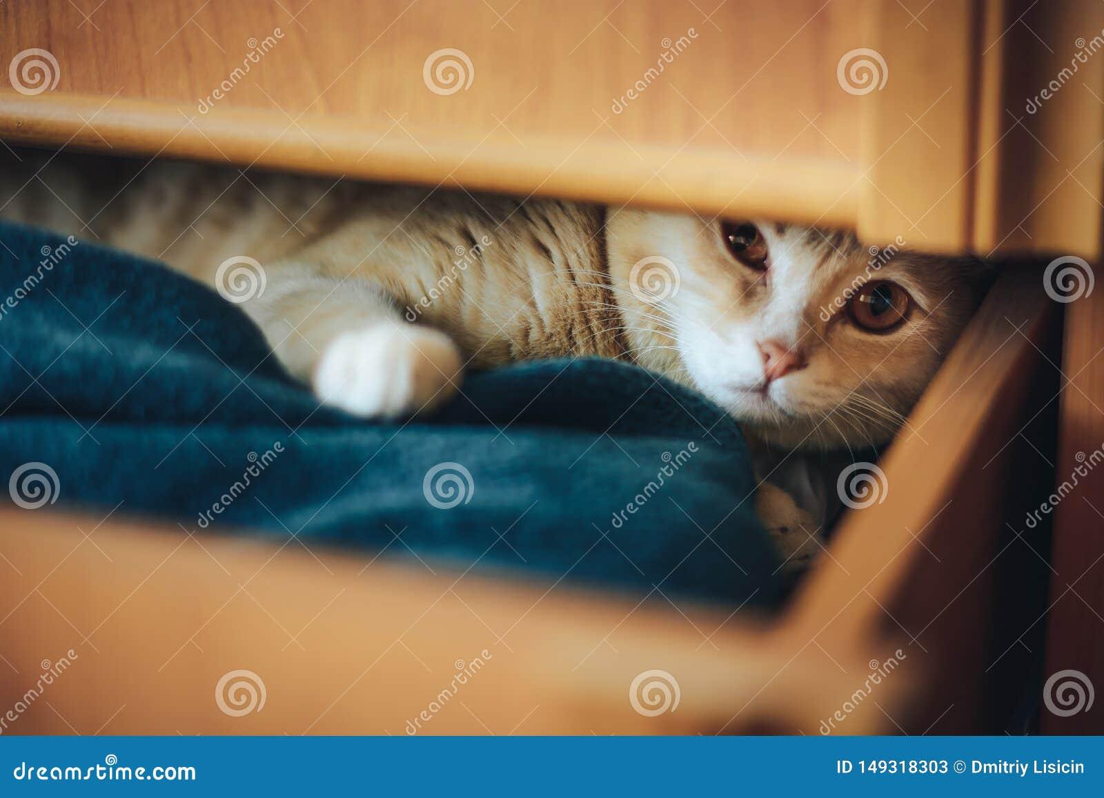 O gatinho novo fechou-se em uma caixa e jogado