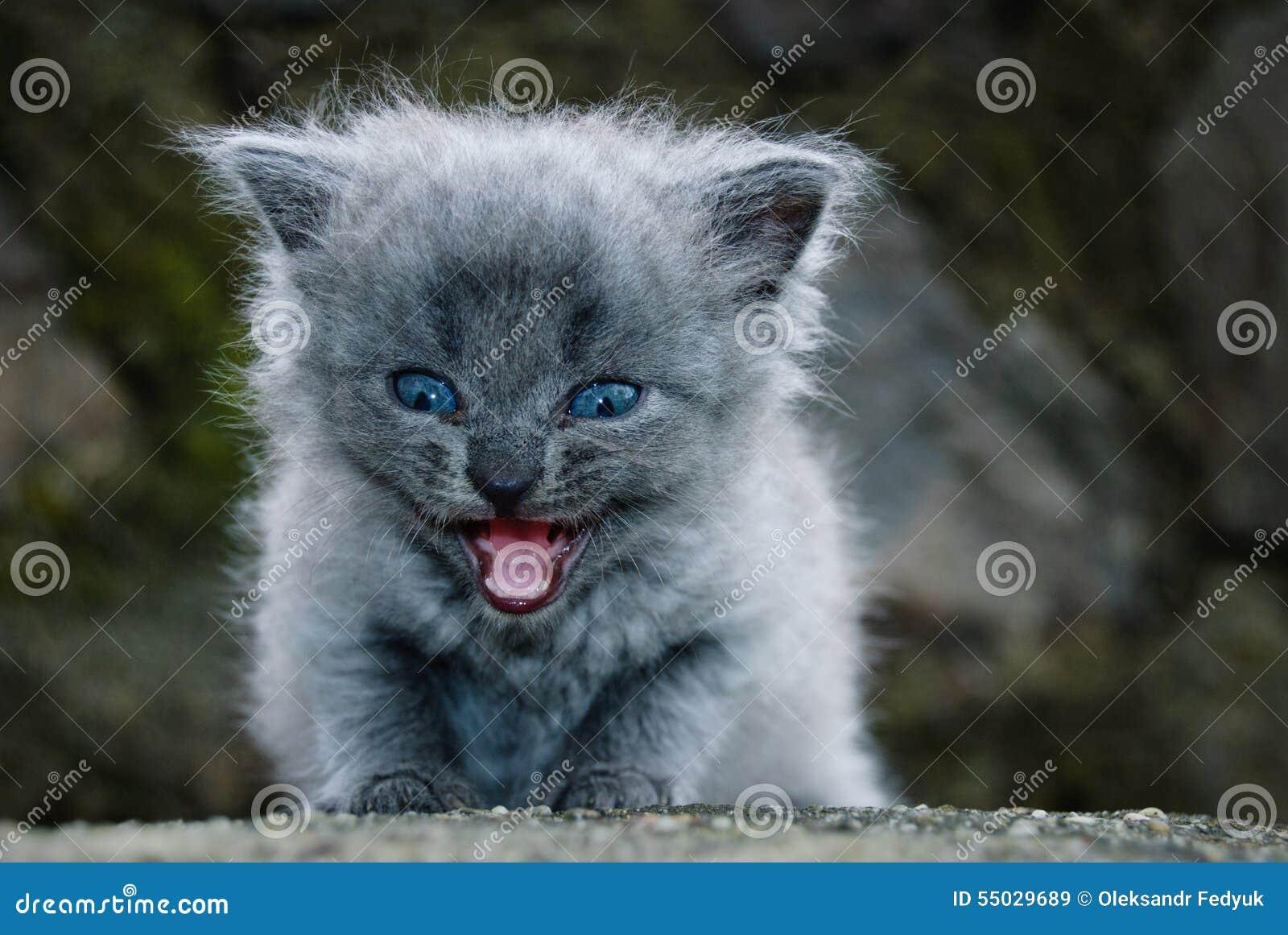 O gatinho pequeno