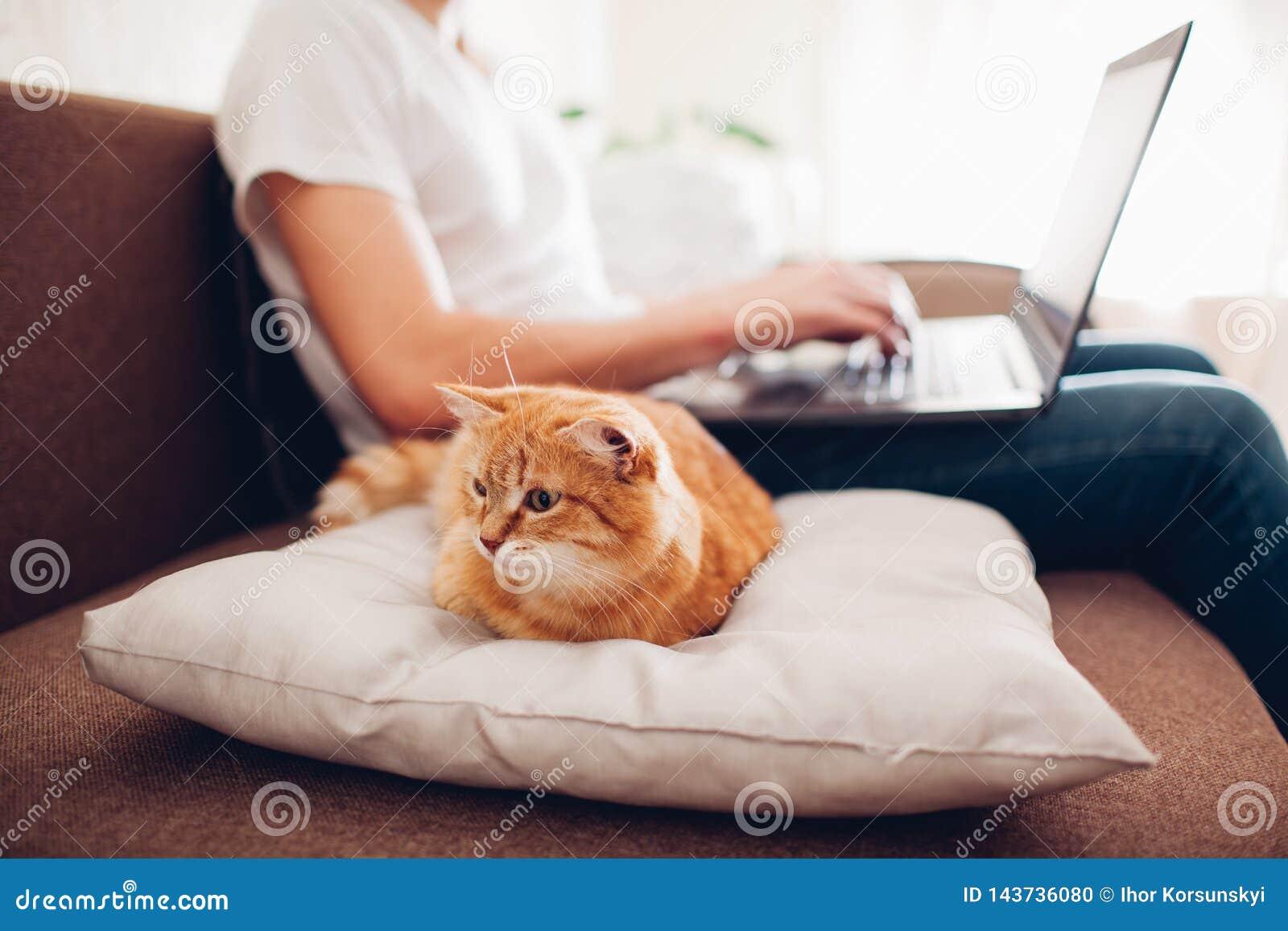 O gato encontra-se em um descanso em casa perto de seu mestre com um port?til