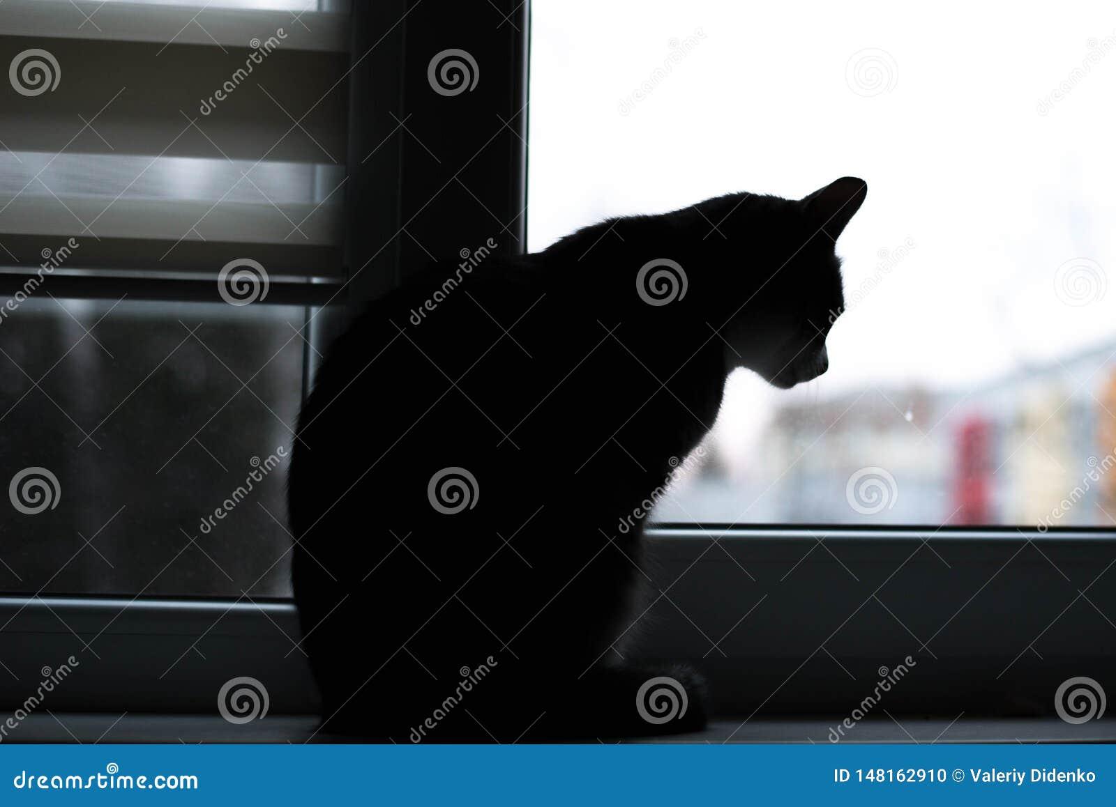O gato olha na janela