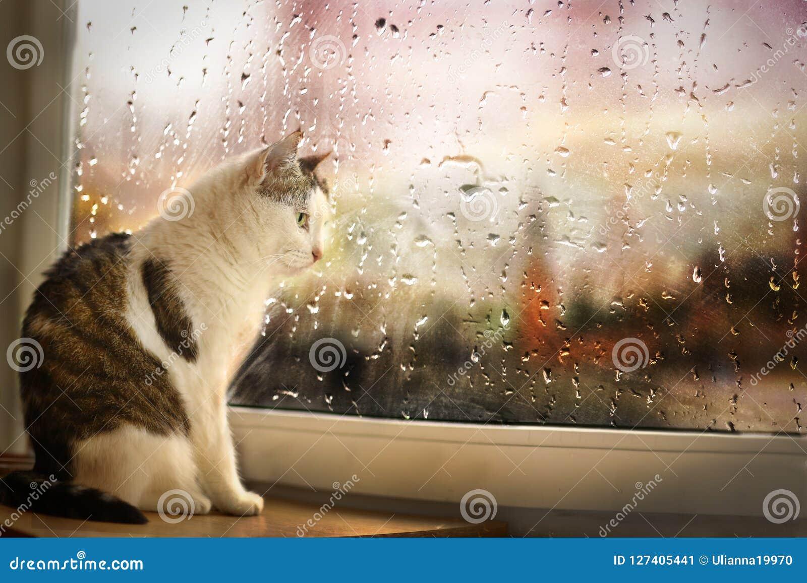 O gato senta-se na rua chuvosa do relógio da soleira embora a janela coberta com a chuva deixa cair