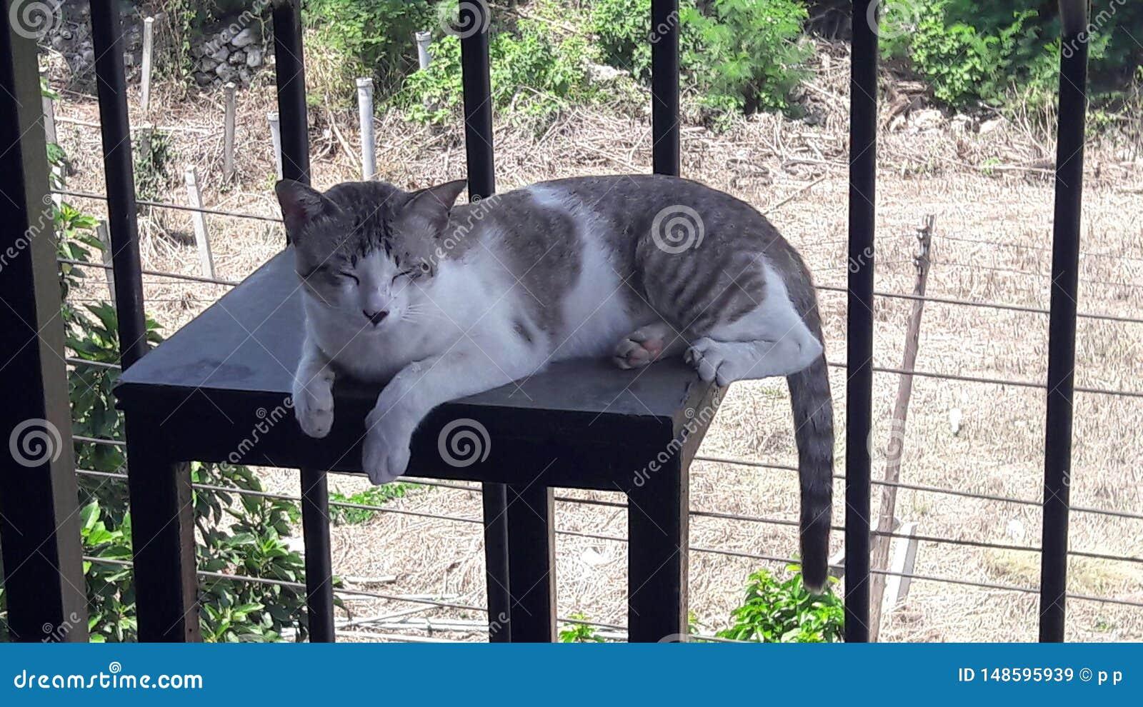 O gato sonolento obtém acordado