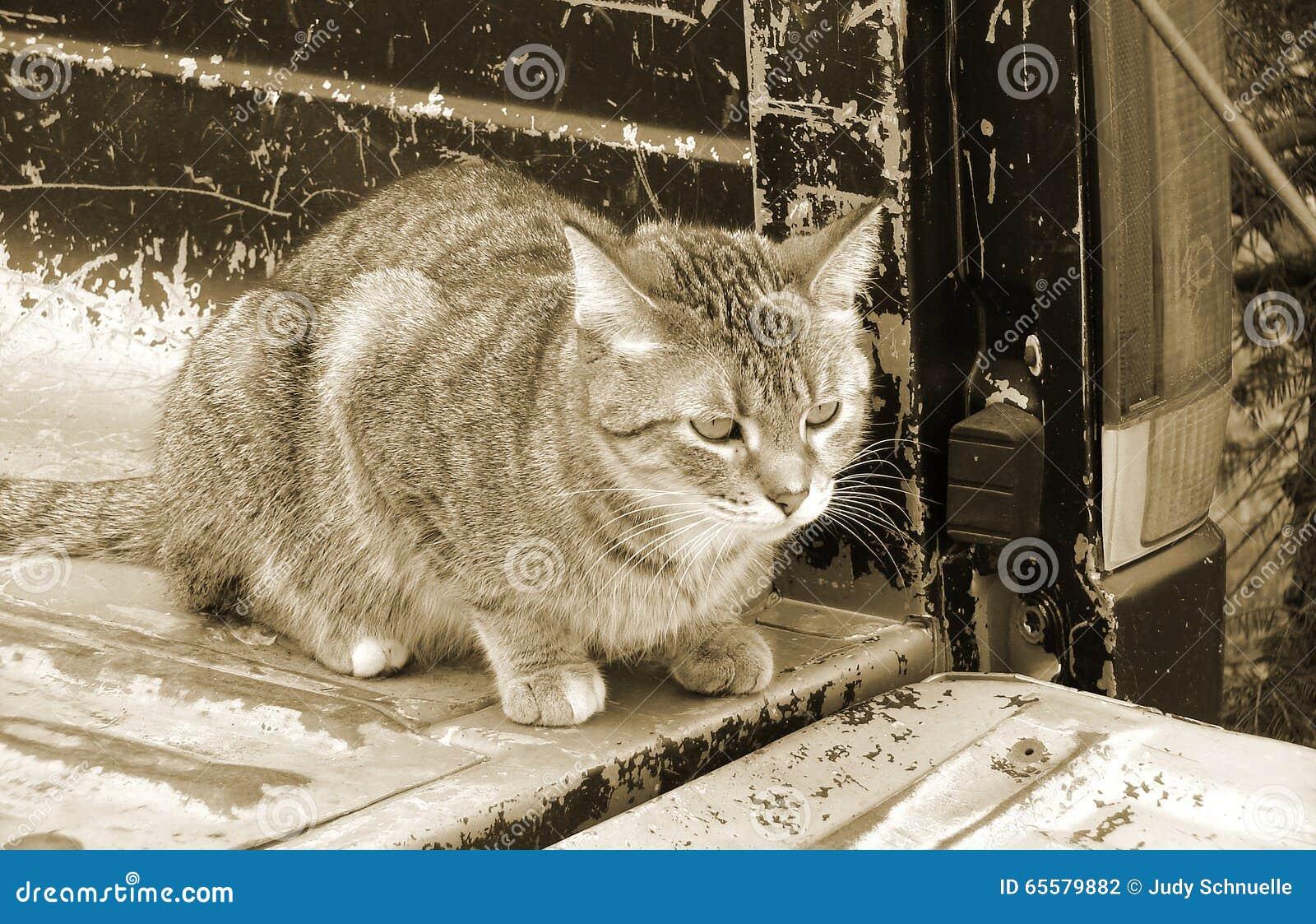 O gato suporta sobre do camionete velho