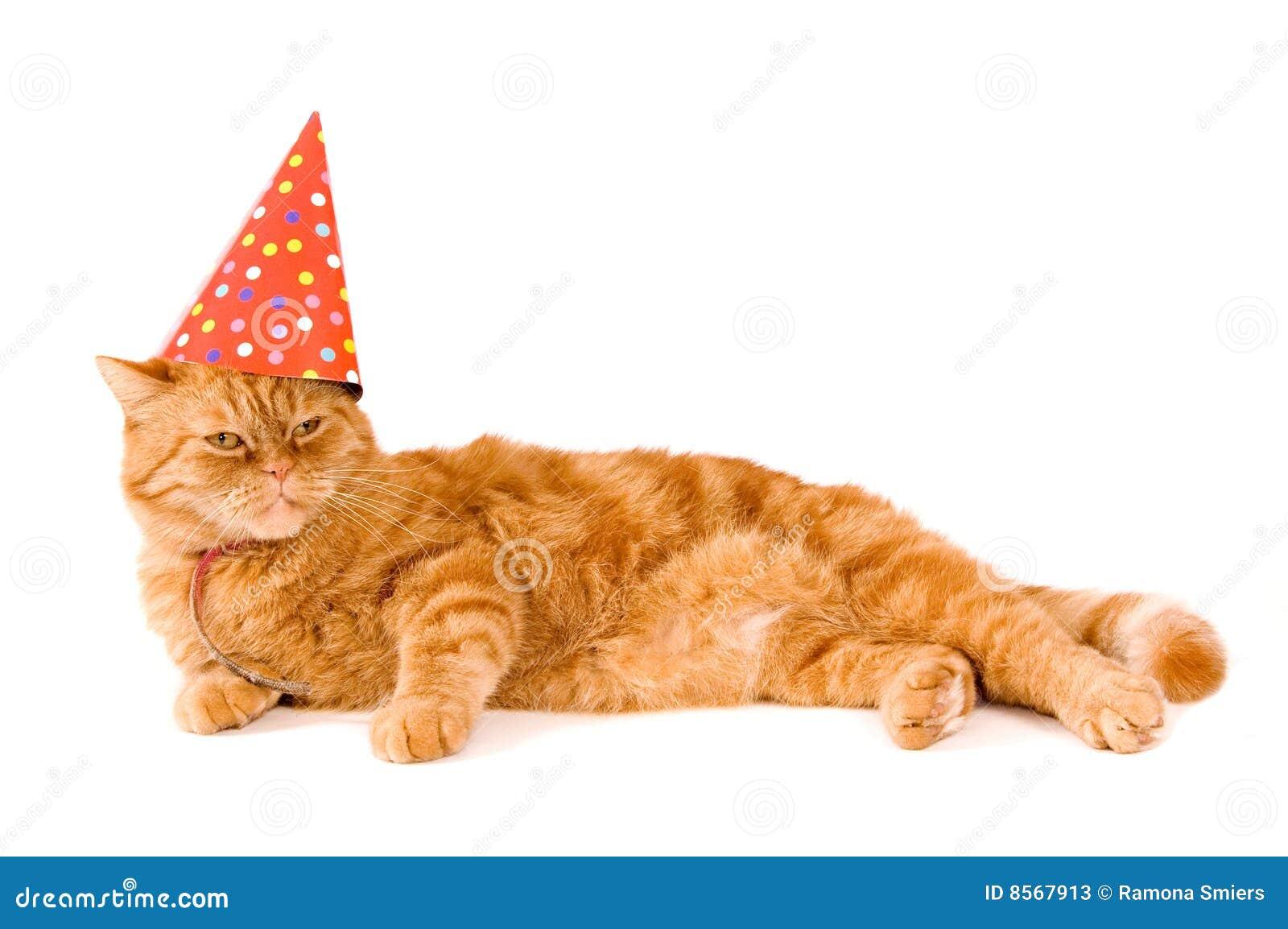 O gato vermelho doméstico está tendo um partido