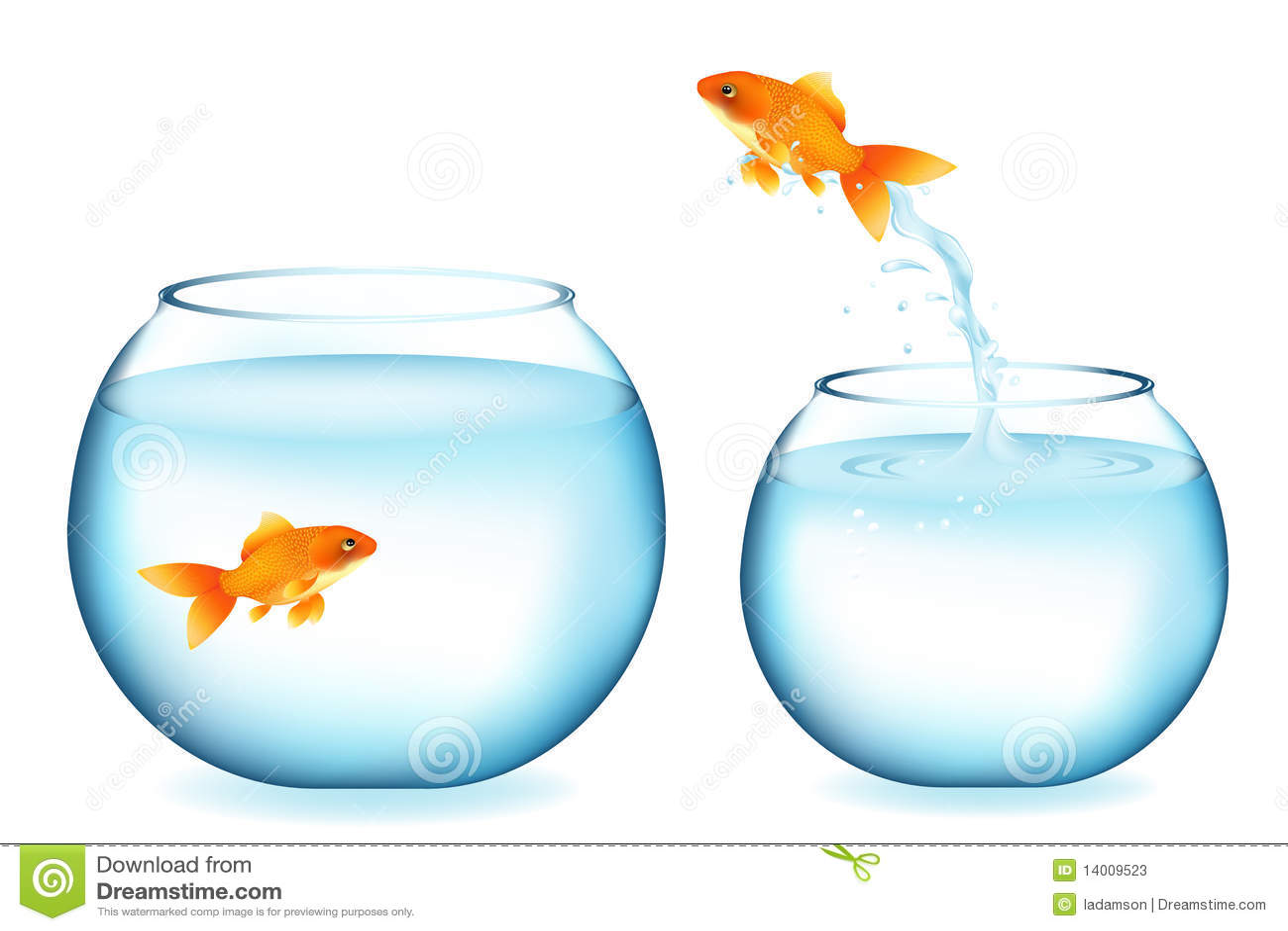 O Goldfish que salta ao outro Goldfish