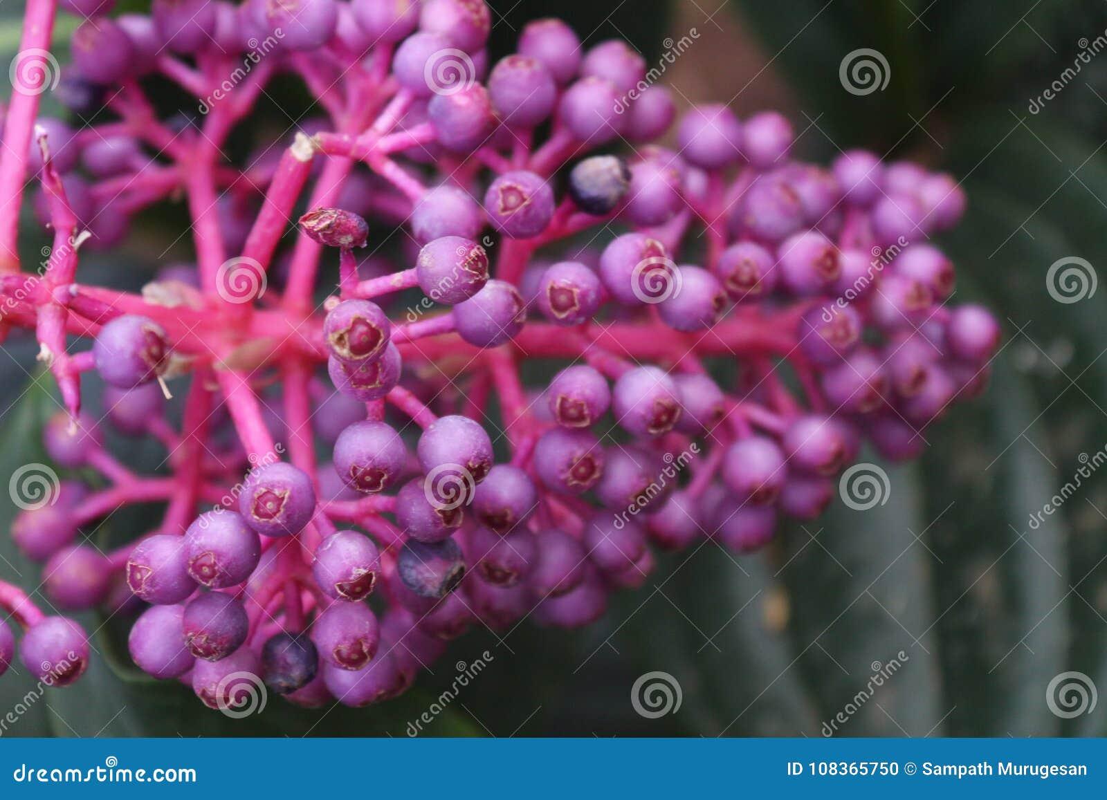 O grupo da cor roxa brota no jardim