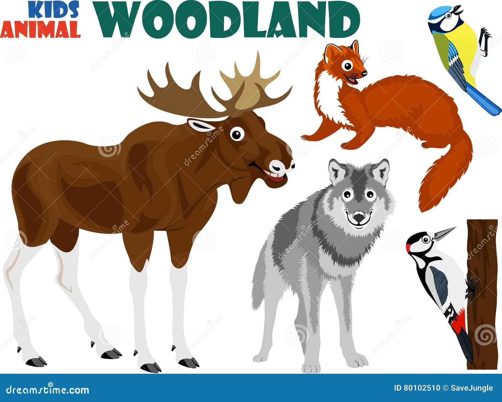 O grupo do vetor de floresta bonito caçoa animais