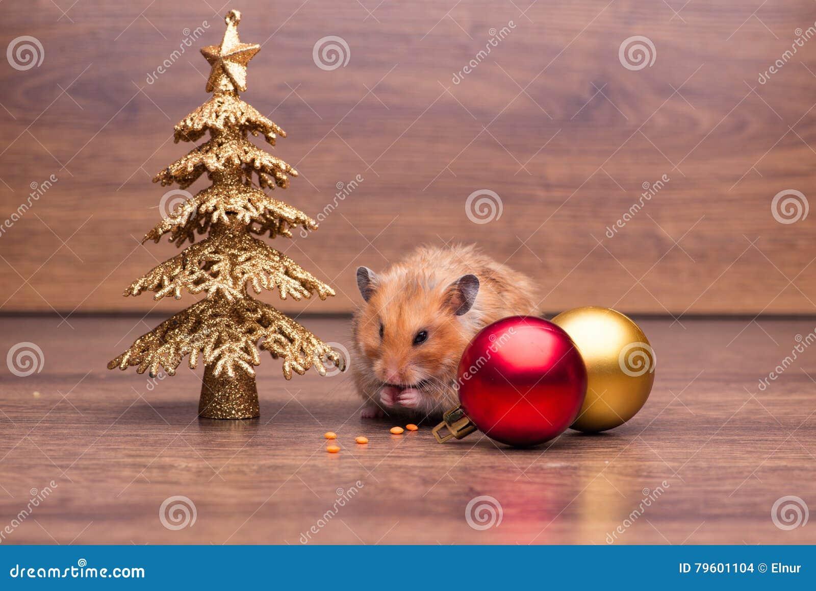 O hamster bonito com o chapéu de Santa na tabela