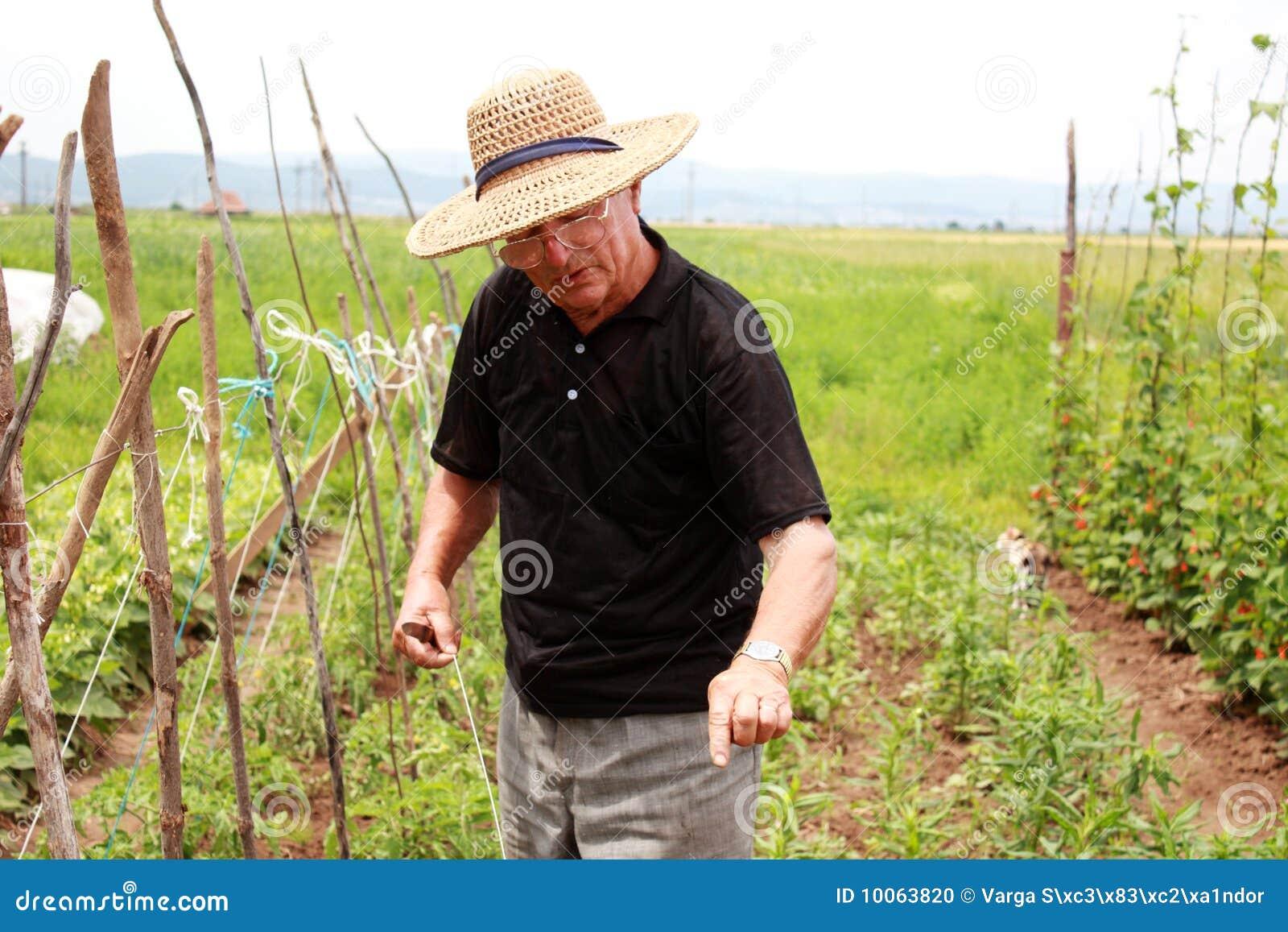 O homem idoso do fazendeiro explica como cultivar