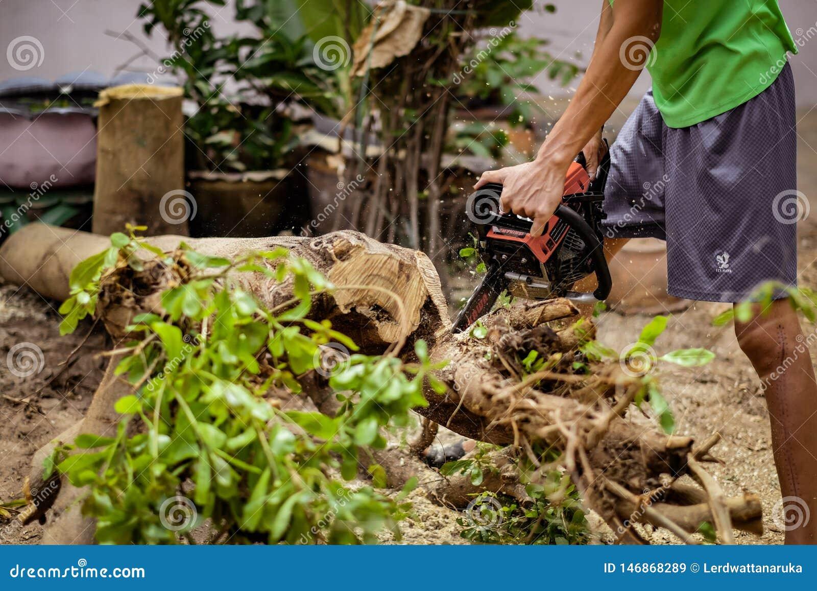 O homem novo usa a serra elétrica para cortar árvores