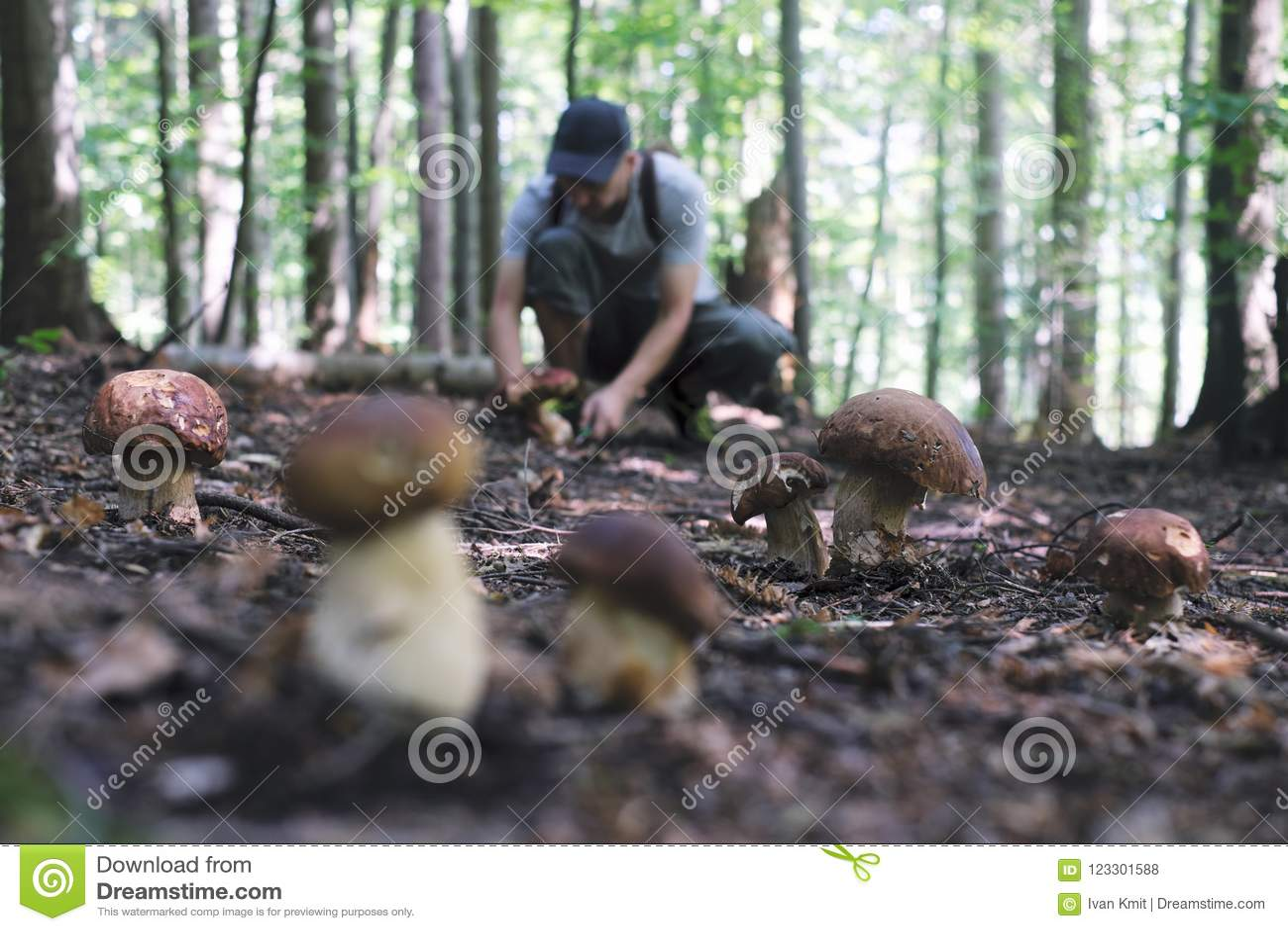 O homem recolhe cogumelos