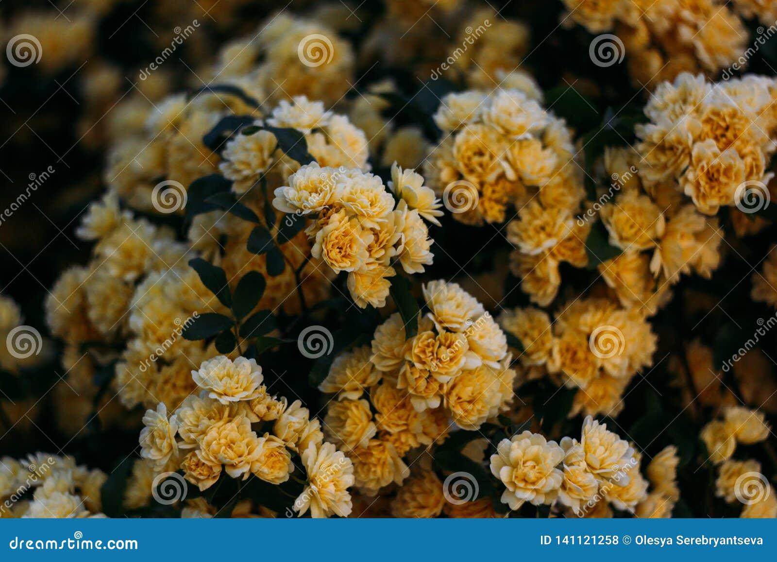 O jardim amarelo aumentou com flores pequenas