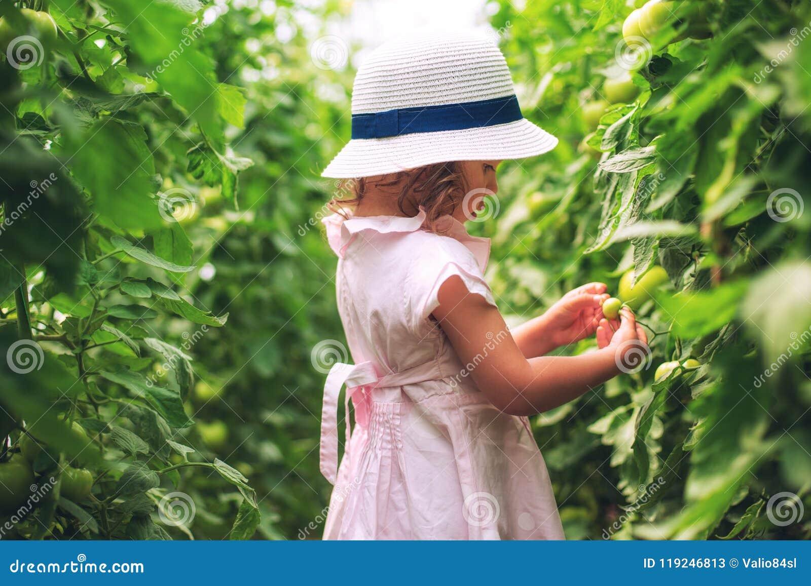 O jardineiro bonito da menina escolheu tomates orgânicos na casa verde