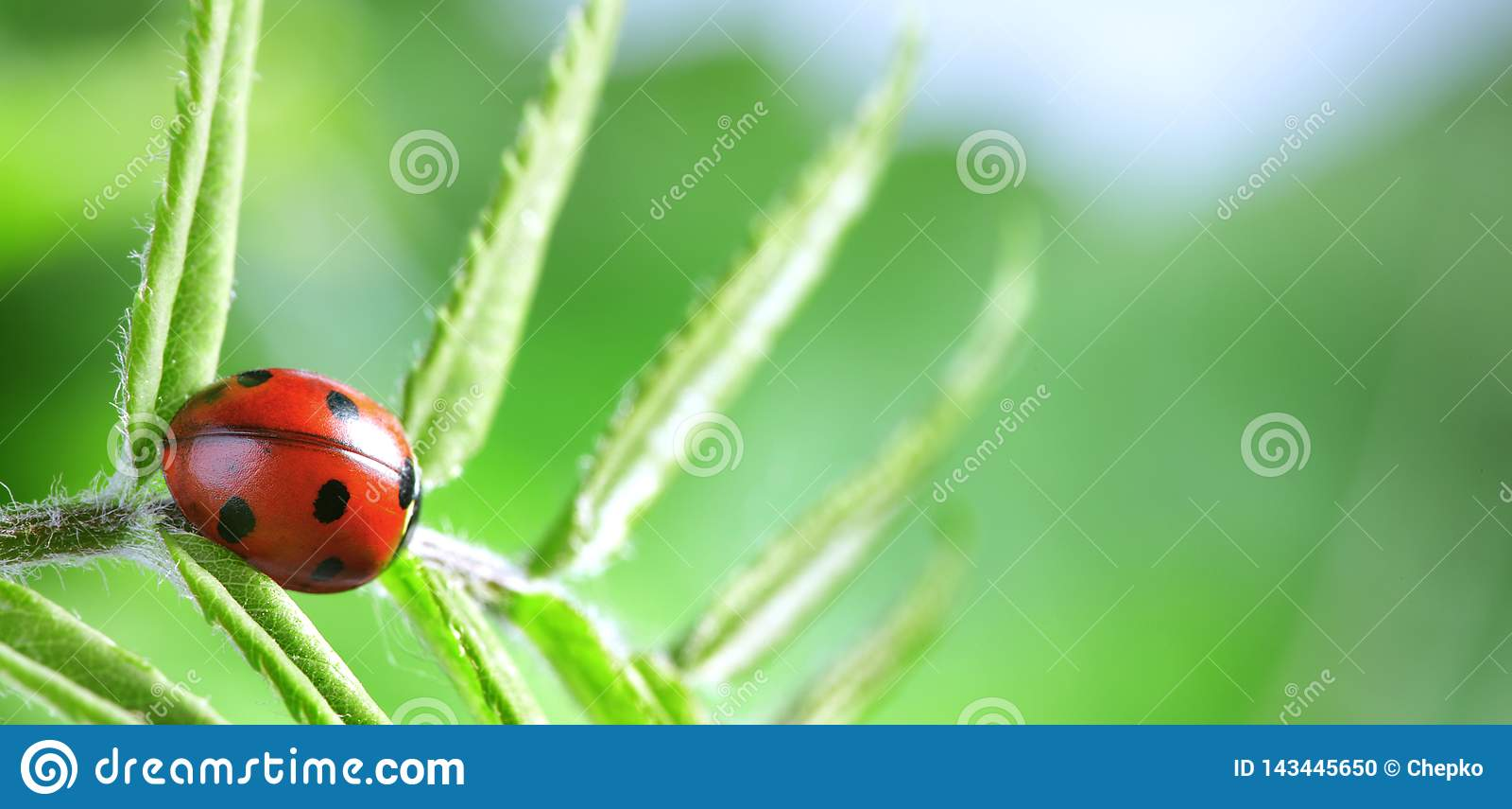 O joaninha vermelho na folha verde, joaninha rasteja na haste da planta na mola no verão do jardim