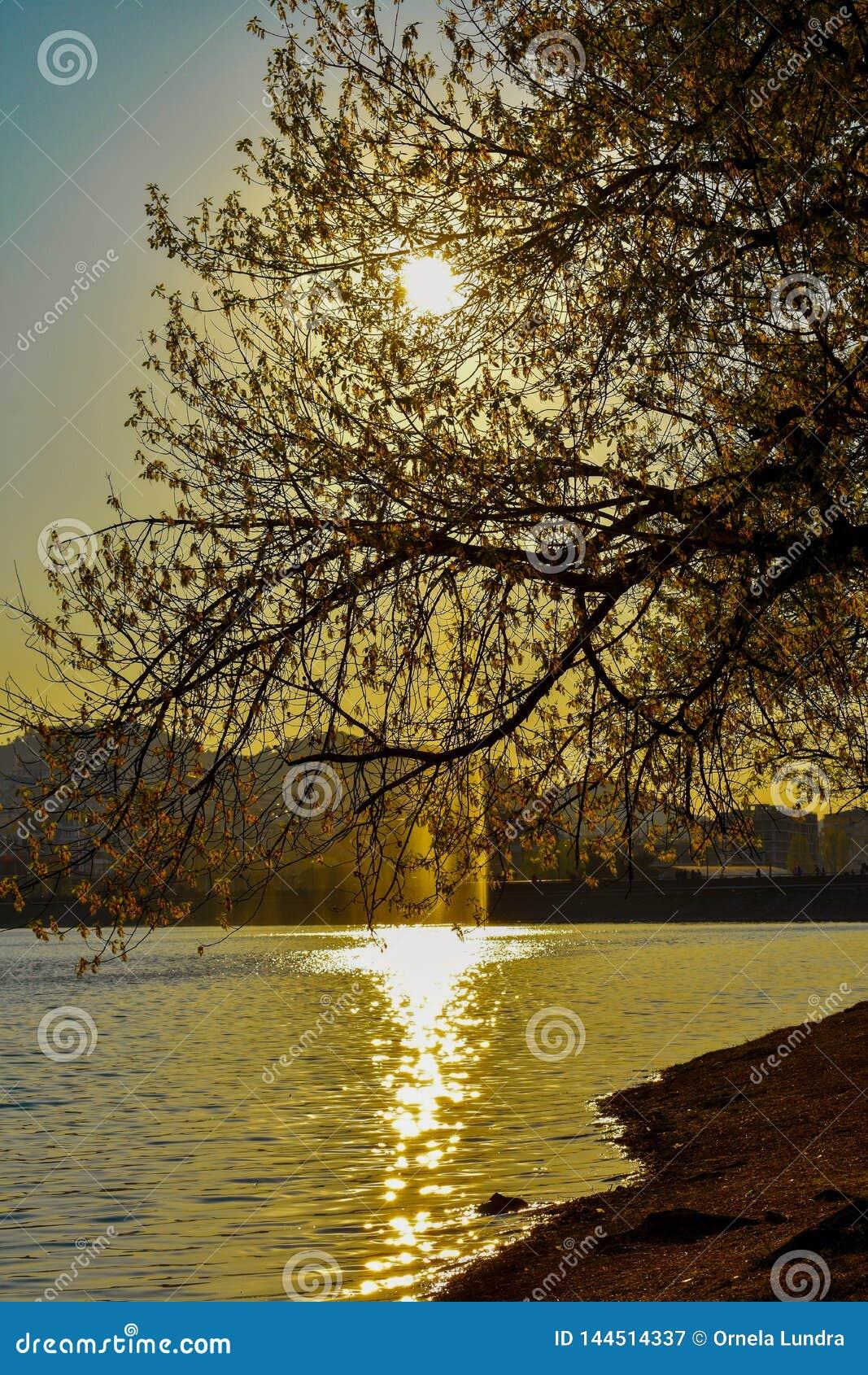 O lago artificial de tirana durante a hora dourada