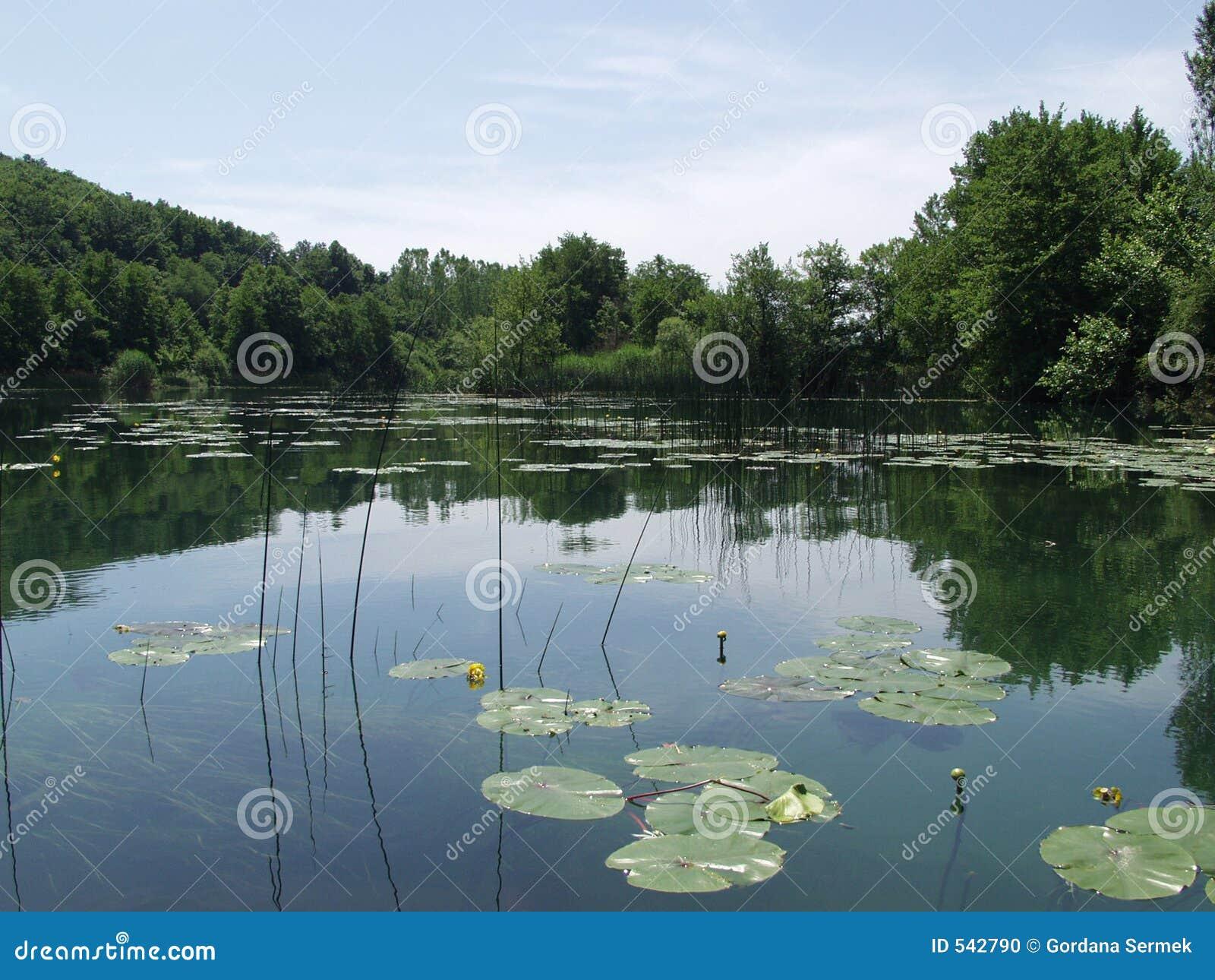 O lago calmo com nuvens e árvores refletiu na água
