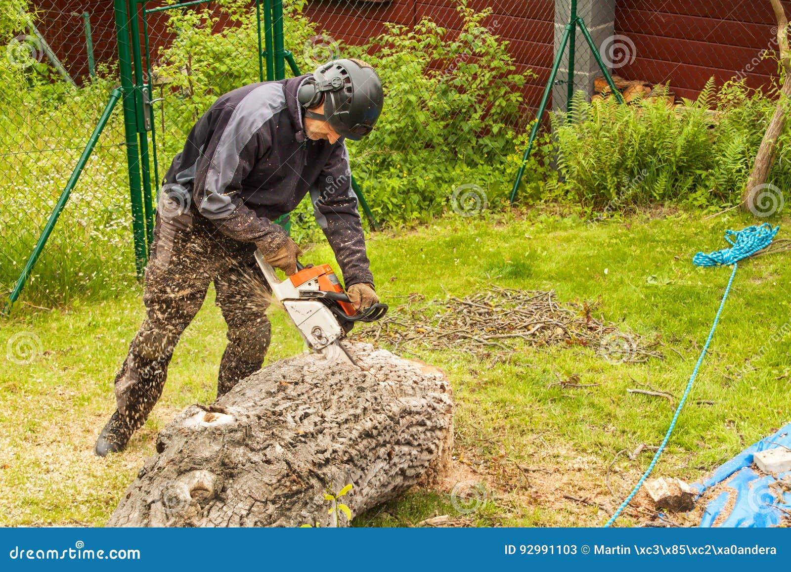 O lenhador corta a serra de cadeia Lenhador profissional Cutting uma árvore grande no jardim