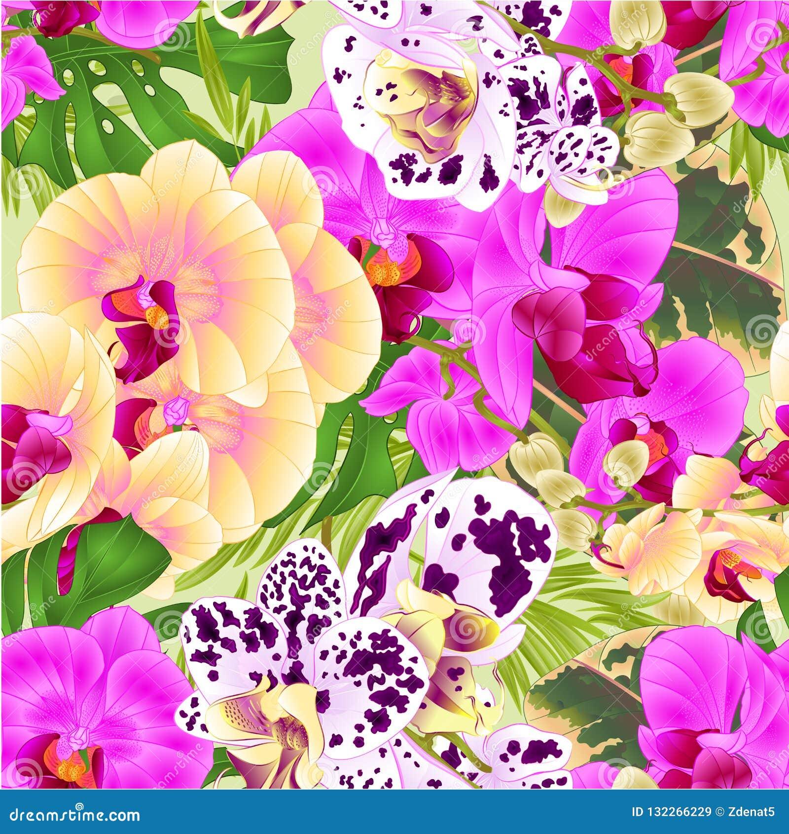 O lila amarelo das orquídeas sem emenda da haste da textura manchou a ilustração botânica f do vetor do vintage da planta tropica