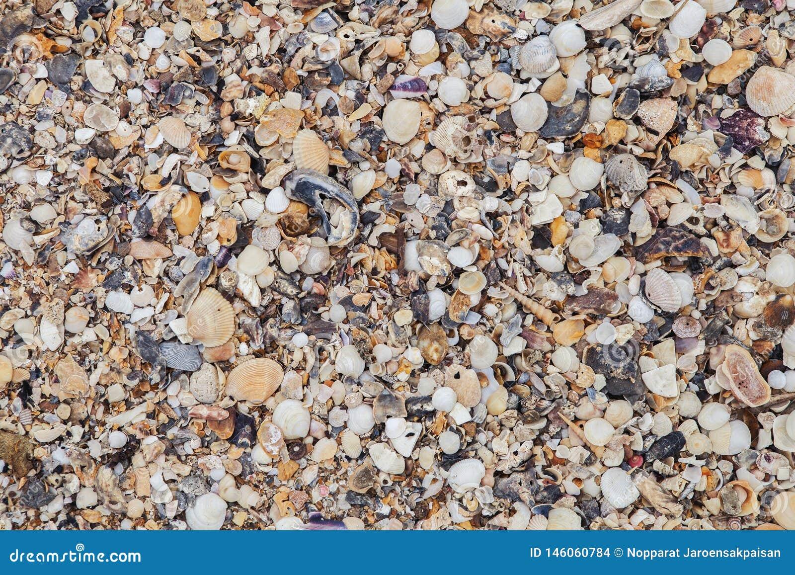 O mar descasca o fundo Textura do shell do mar