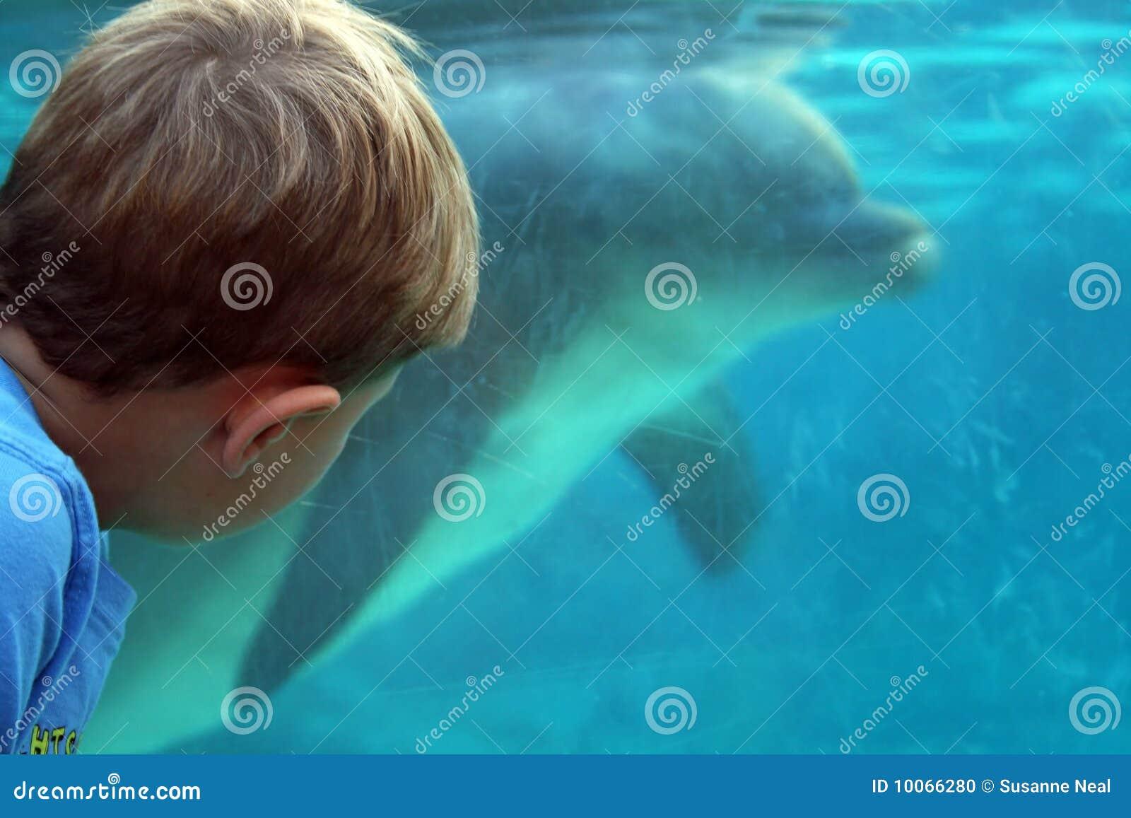 O menino presta atenção ao golfinho sob a água