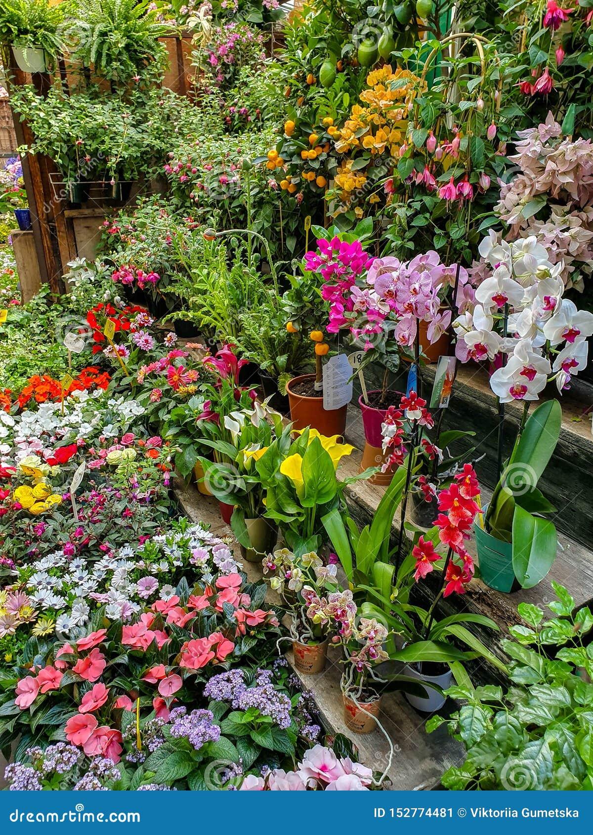 O mercado da flor em Paris localizou no Ile de la Menção, entre a capela da catedral e do Sainte-Chapelle de Notre-Dame