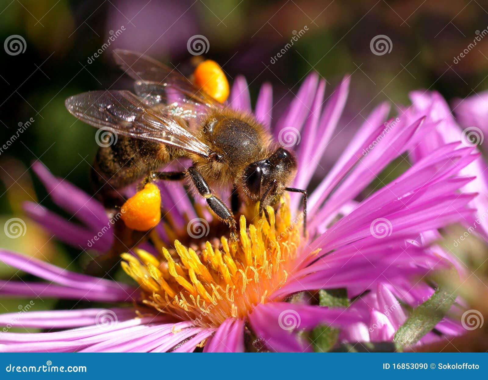 O mundo dos insetos