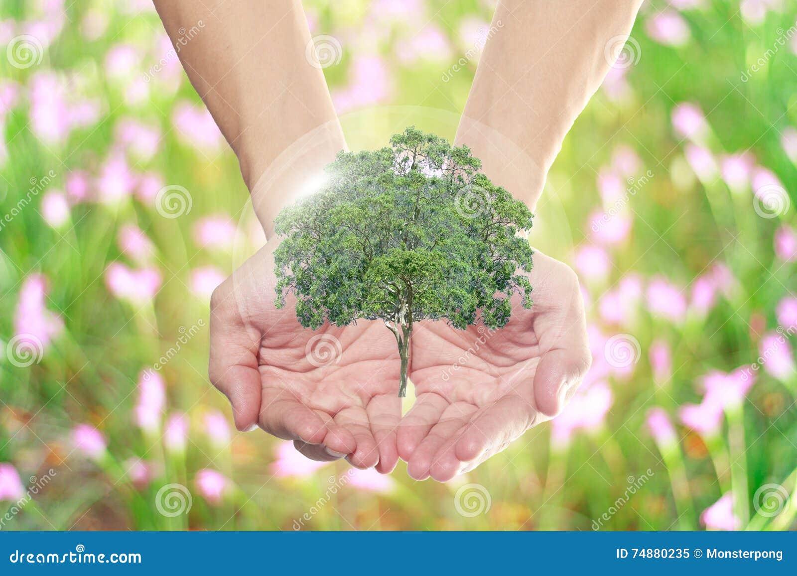 O mundo natural nas mãos de todos