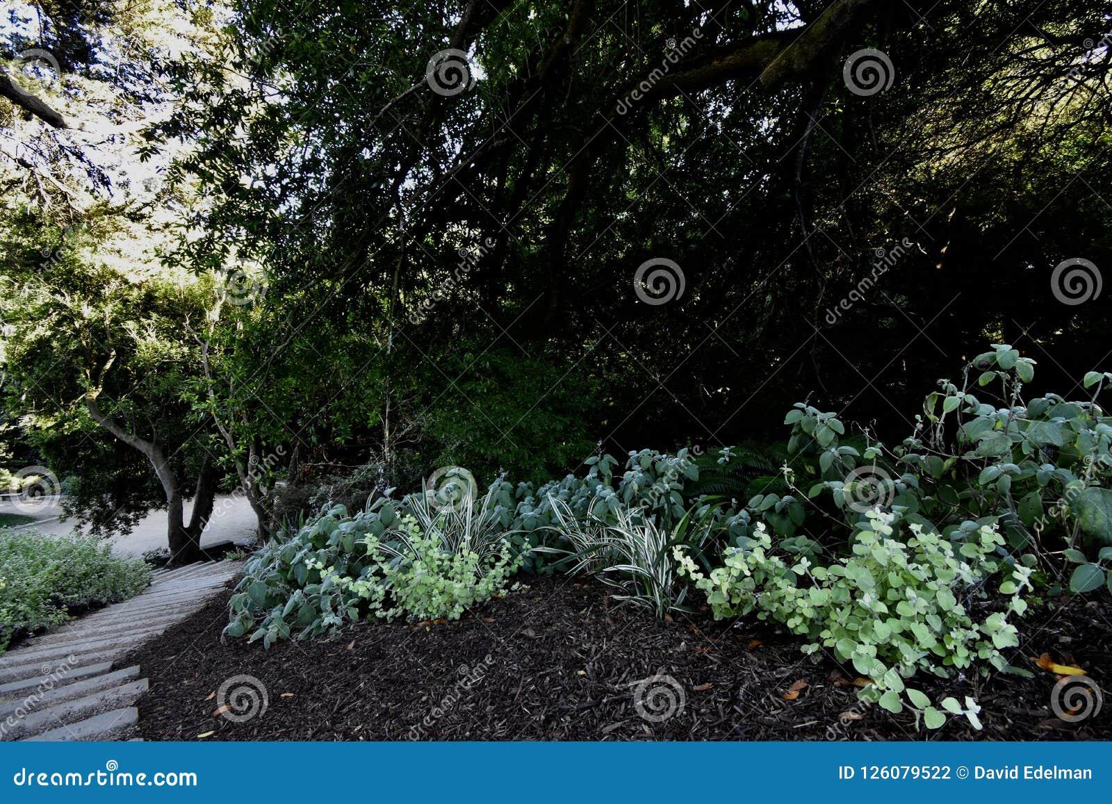 O nacional AJUDA ao bosque memorável San Francisco, 2