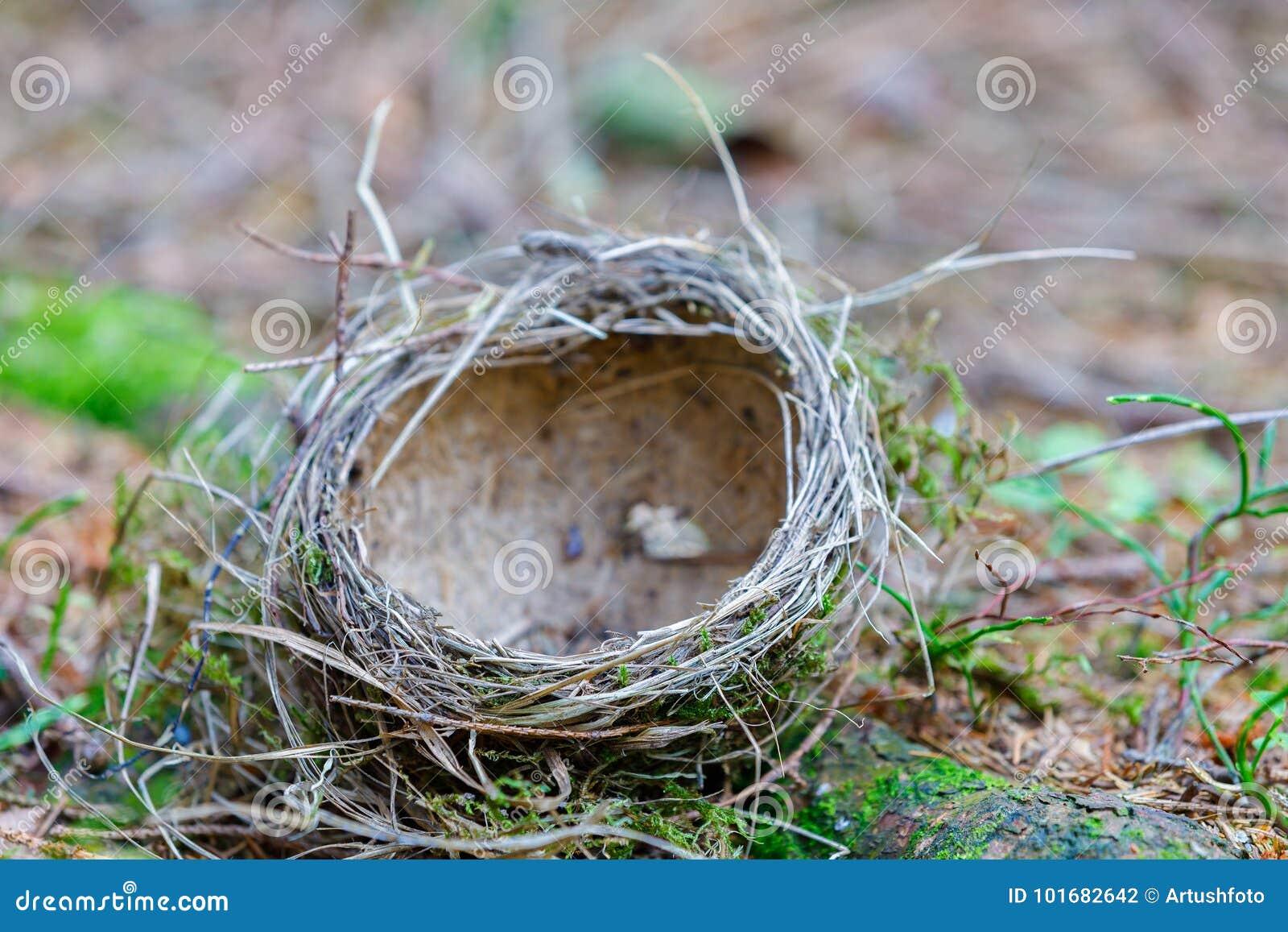 O ninho abandonado s vazio do ` do pássaro encontra-se na terra