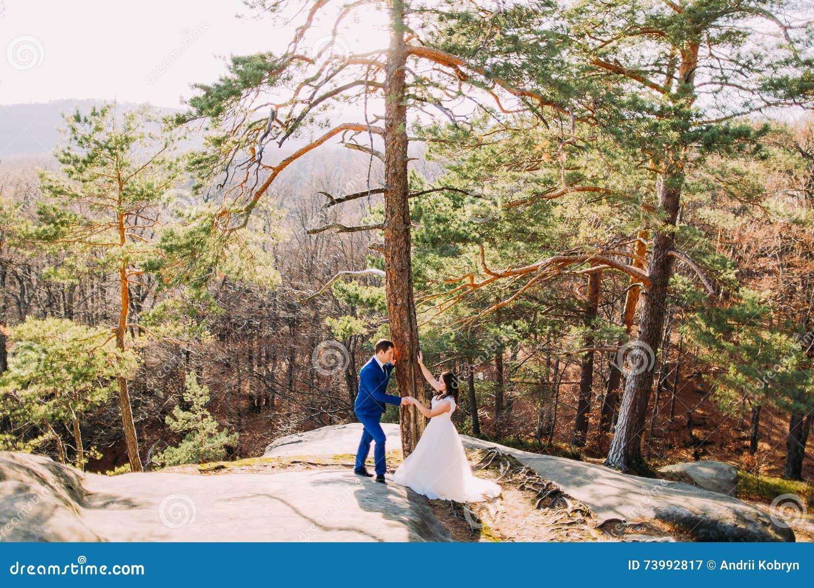 O noivo considerável está guardando delicadamente sua esposa nova elegante sob o pinheiro Paisagem da montanha