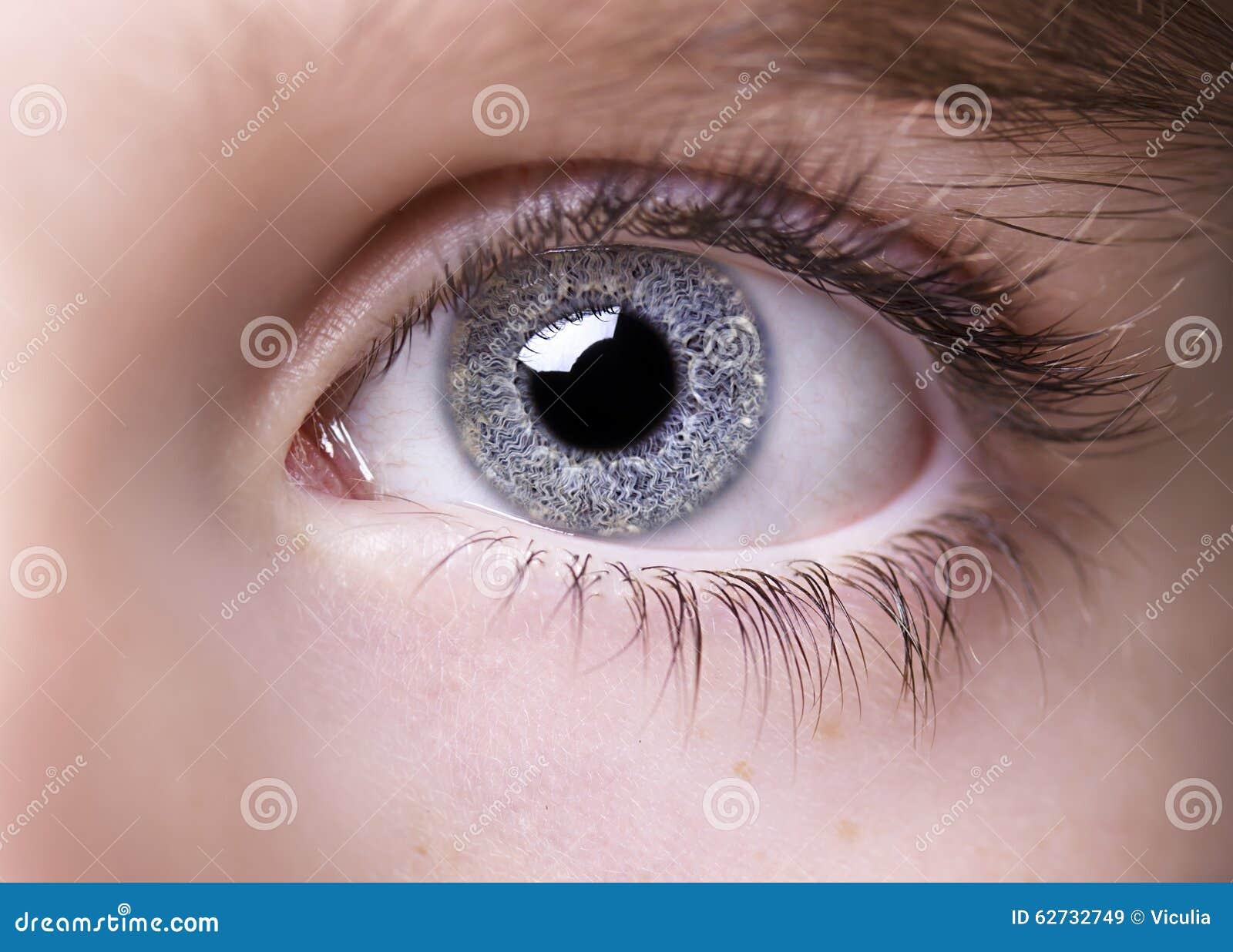 O olhar perspicaz eyes o menino