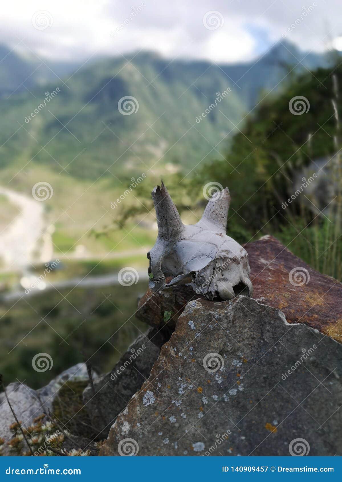 O osso de um animal nas montanhas