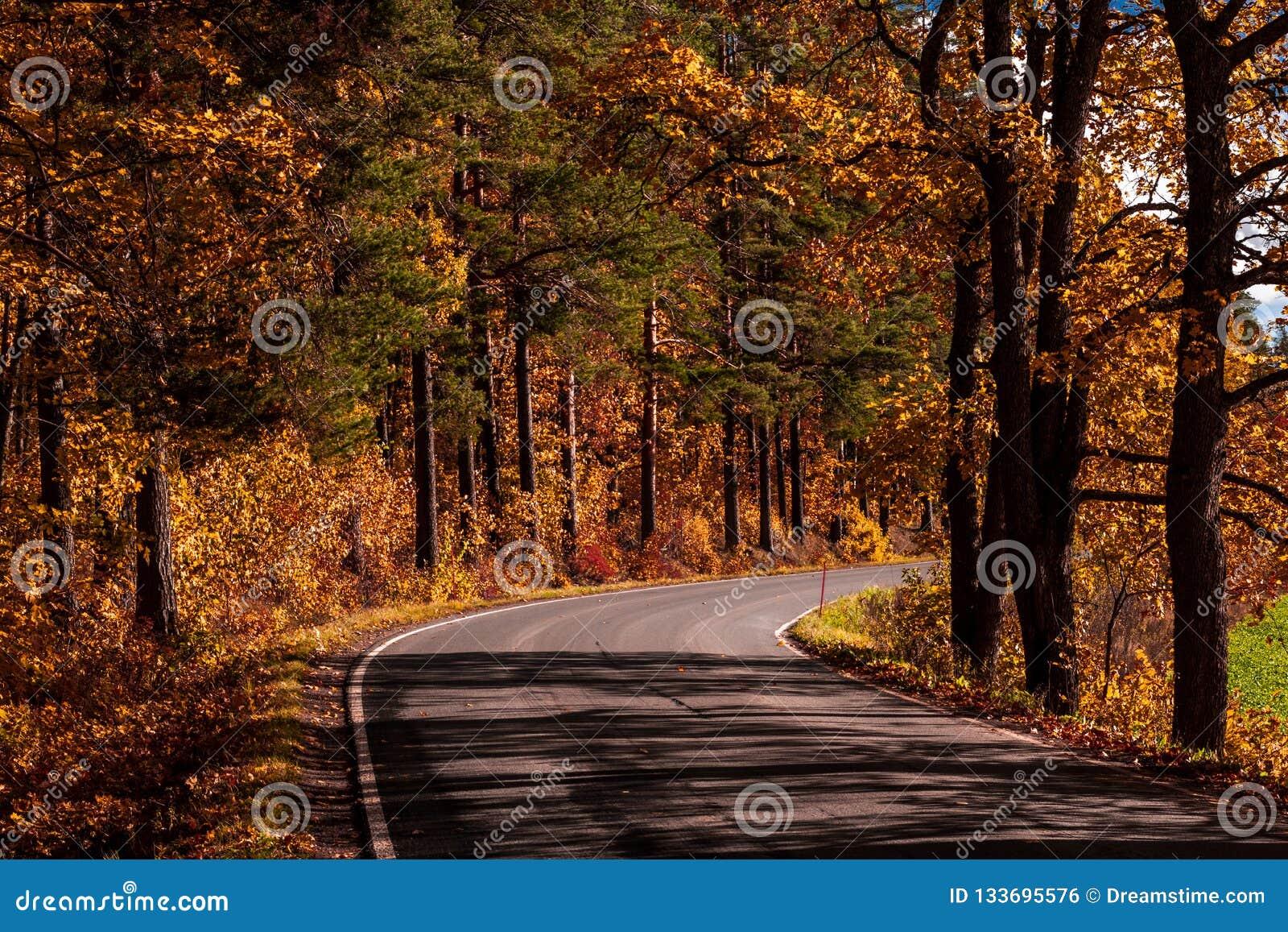 O outono da calha da estrada coloriu madeiras