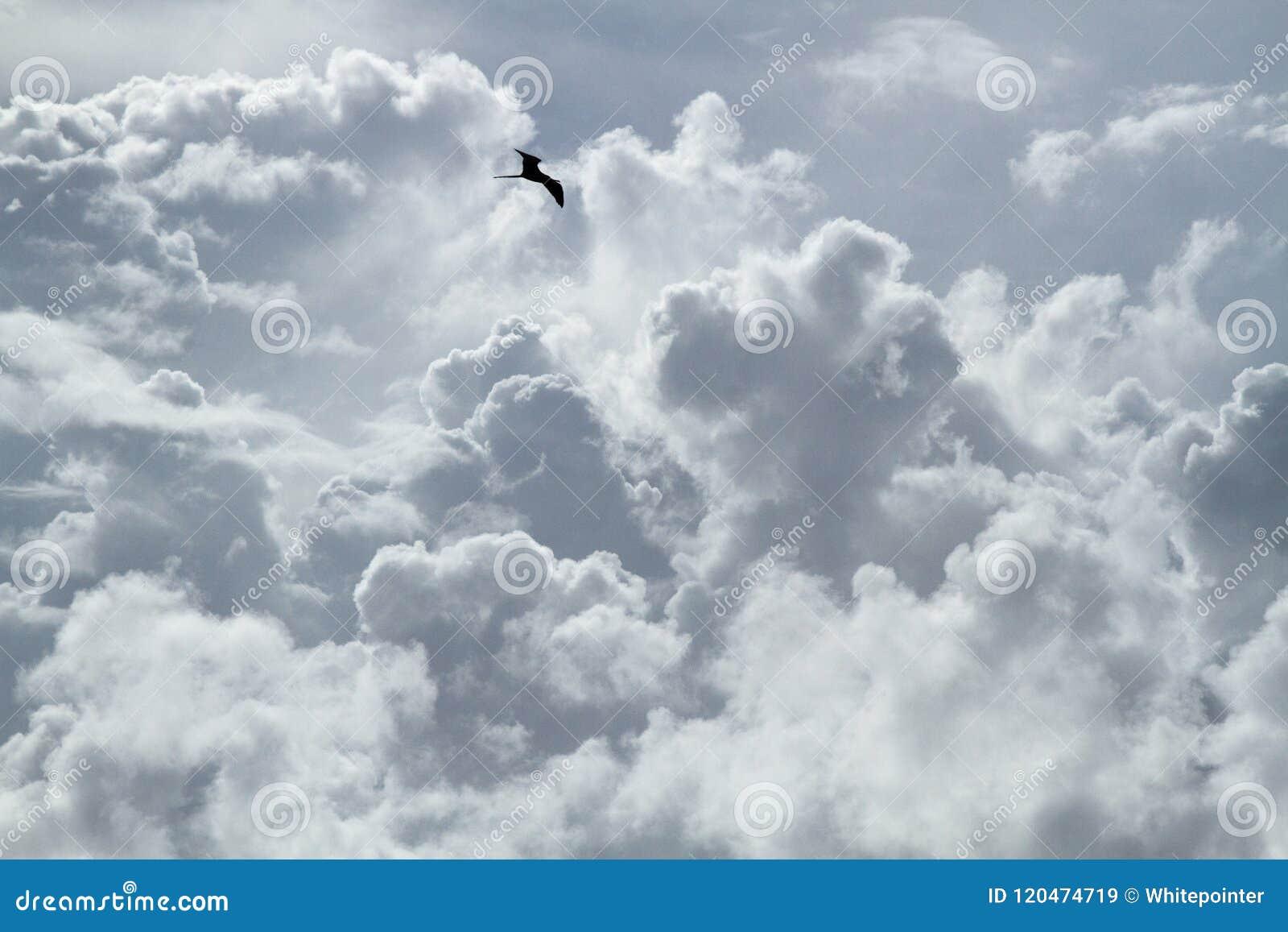 O pássaro está voando ao redor e ao redor no céu nebuloso