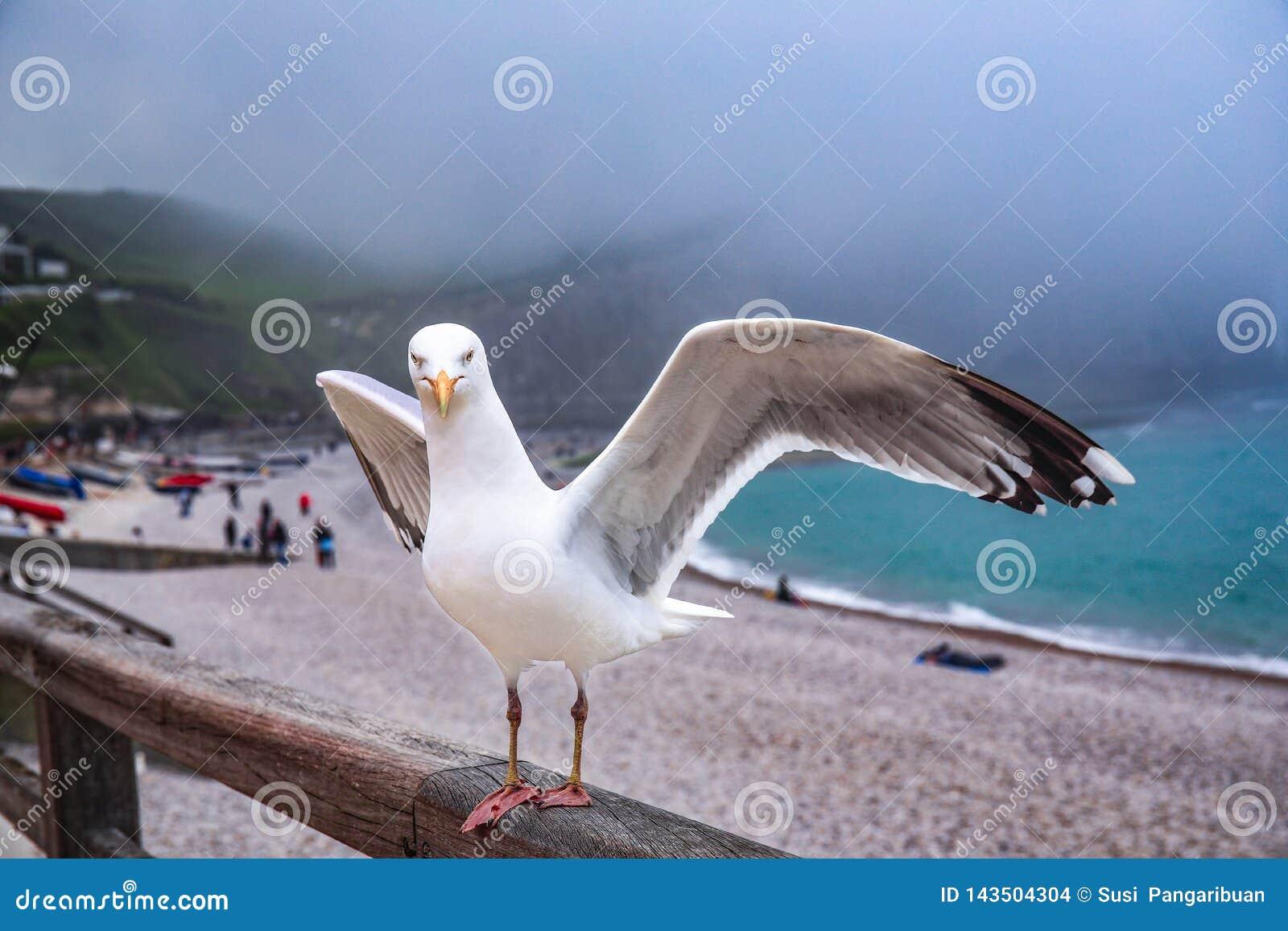 O pássaro quer voar através do vento