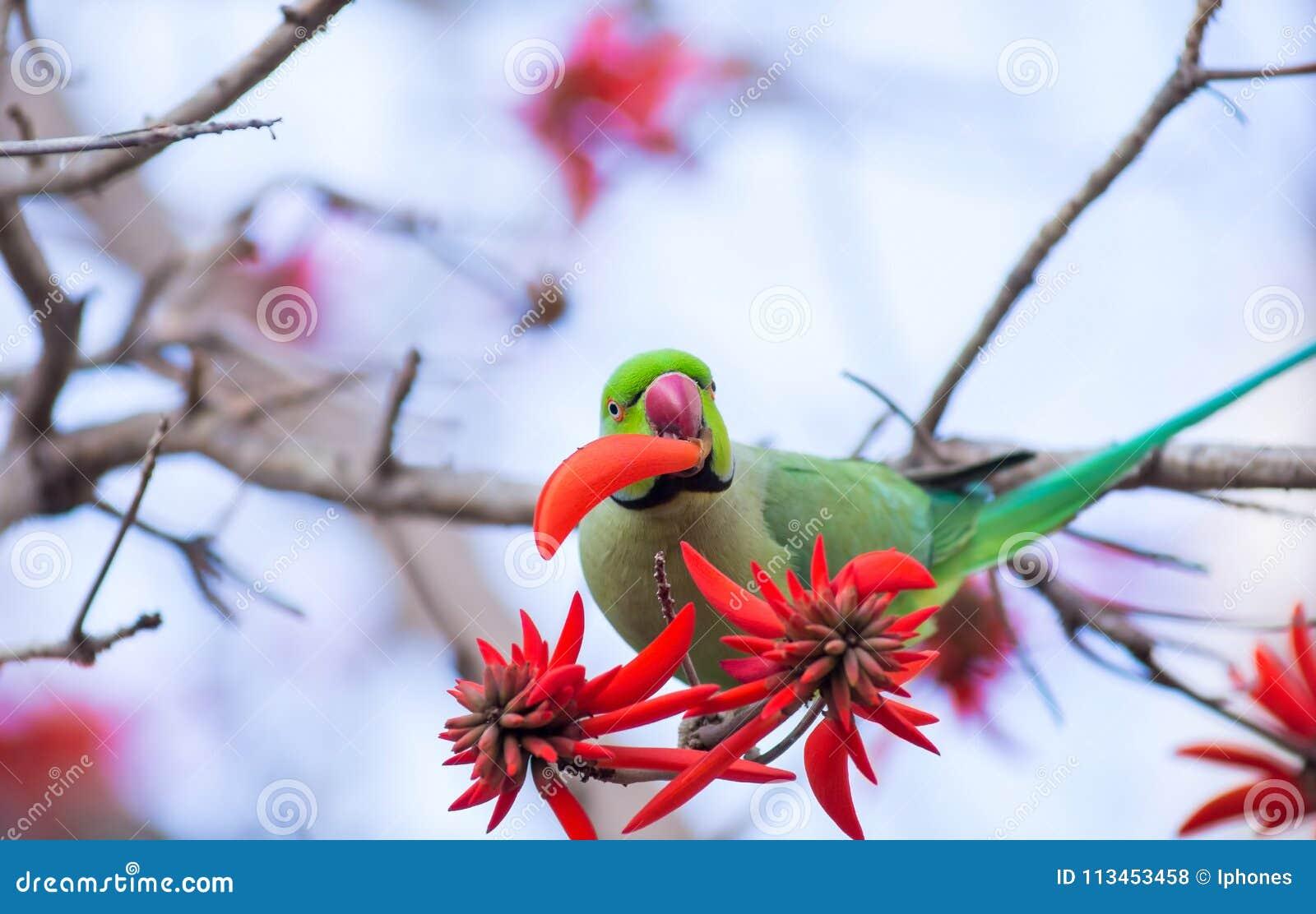 O papagaio verde come a flor